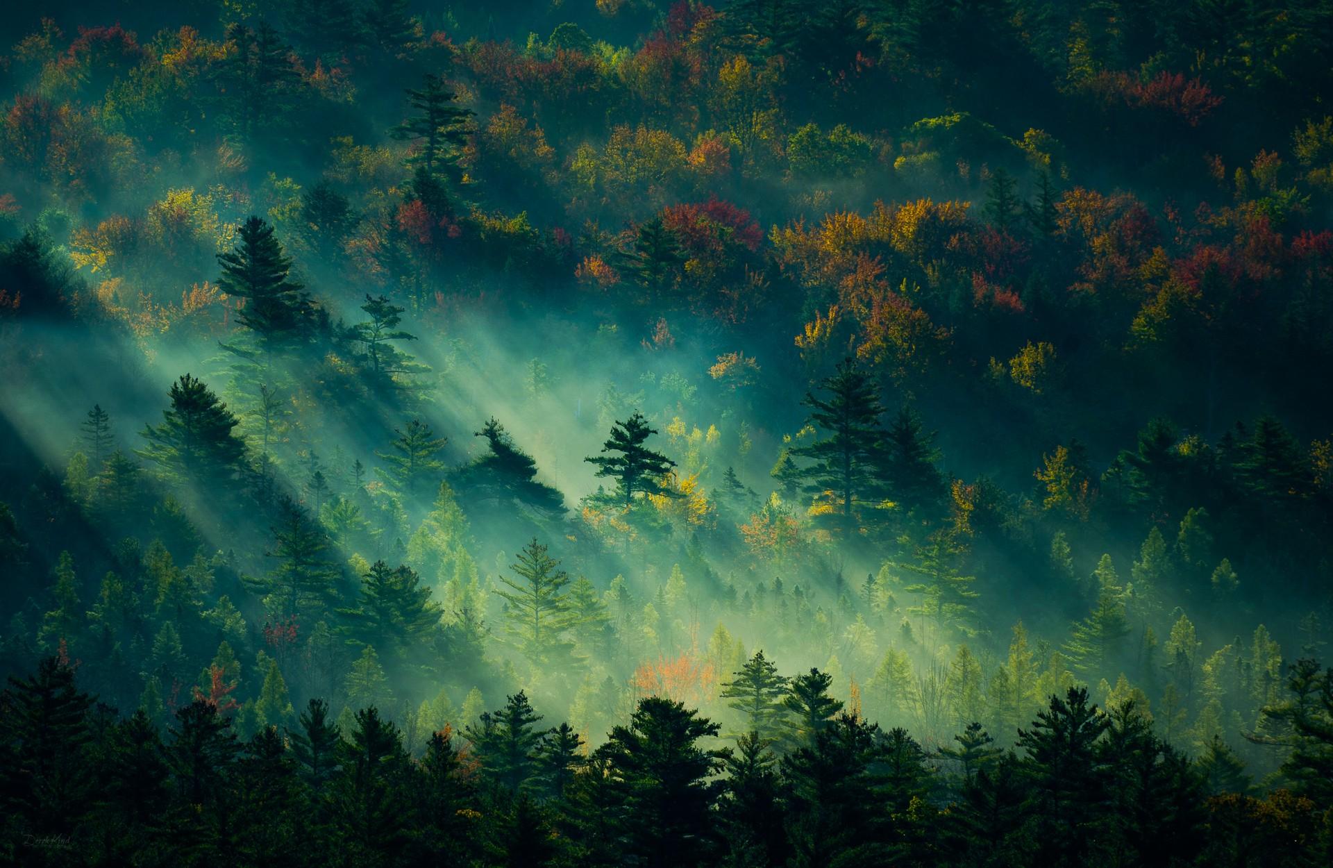 General 1920x1250 nature landscape forest mist England trees fall sunbeams dappled sunlight