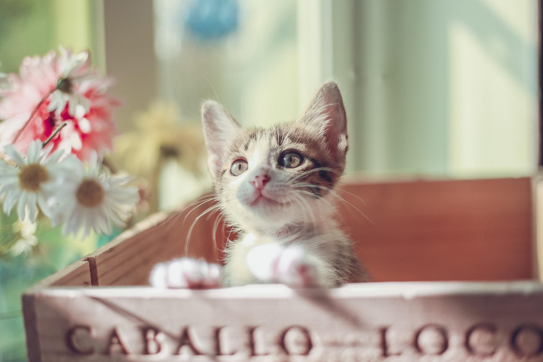 General 2835x1890 cats kittens animals