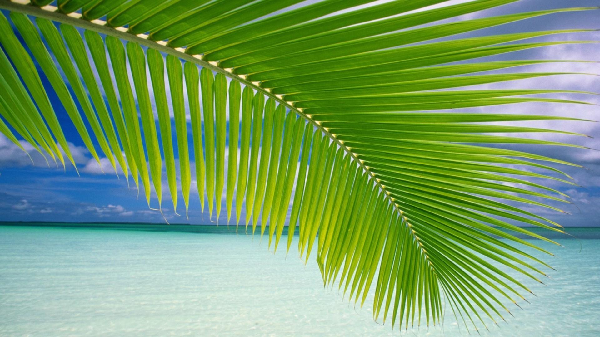 General 1920x1080 landscape palm trees beach green sea horizon tropical nature