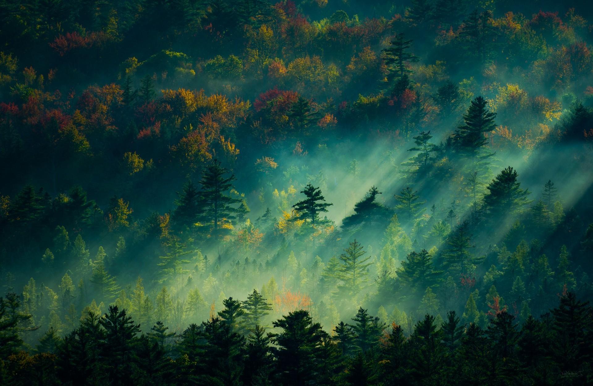 General 1920x1250 nature sunlight photography plants trees forest dappled sunlight mist fall