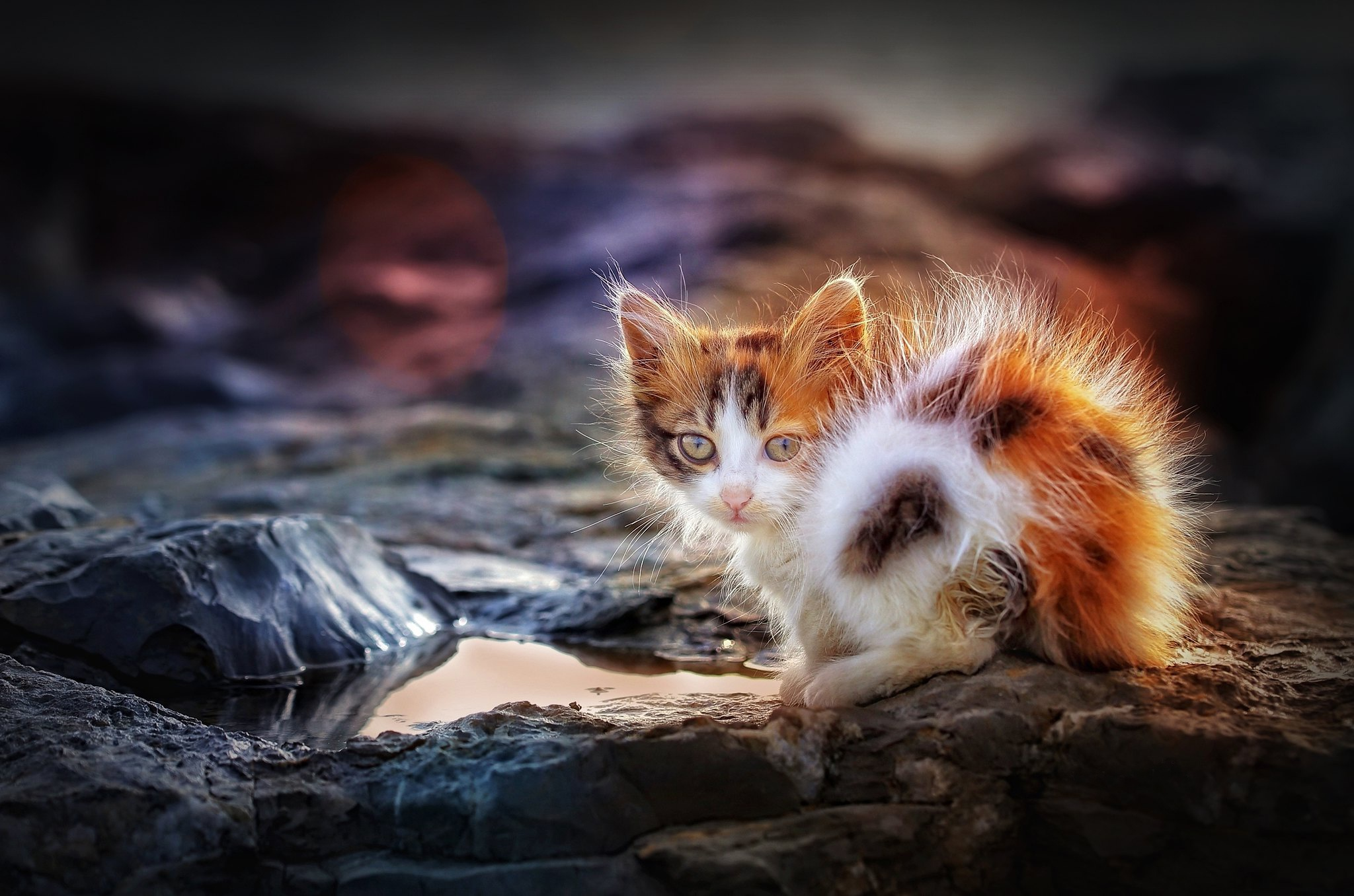 General 2048x1356 cats outdoors animals mammals kittens calico
