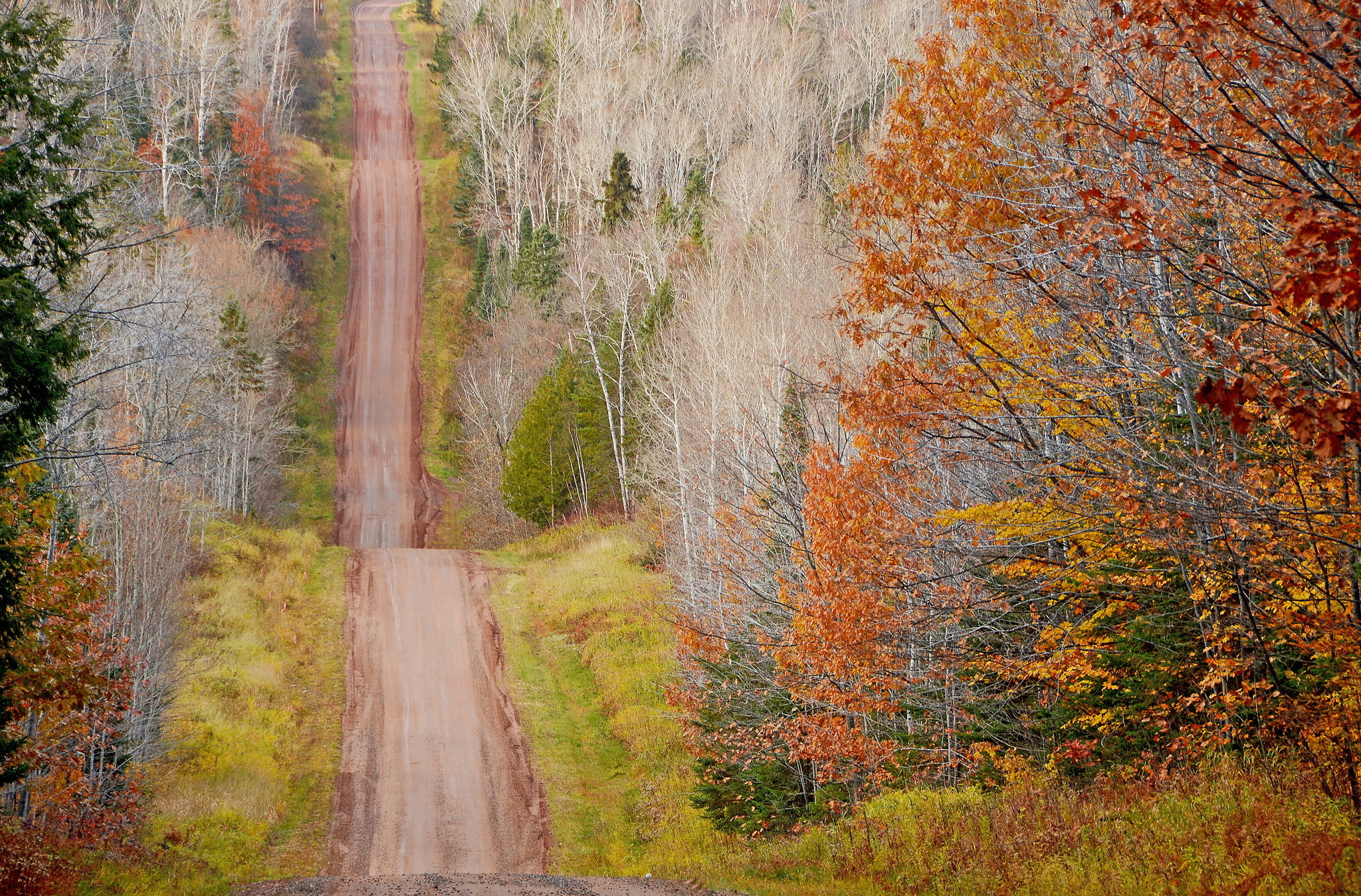 General 2048x1349 landscape fall trees green brown dirtroad nature