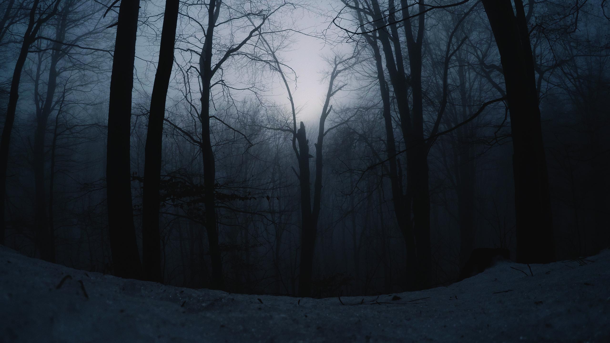 General 2560x1440 nature snow forest trees beech mist dusk