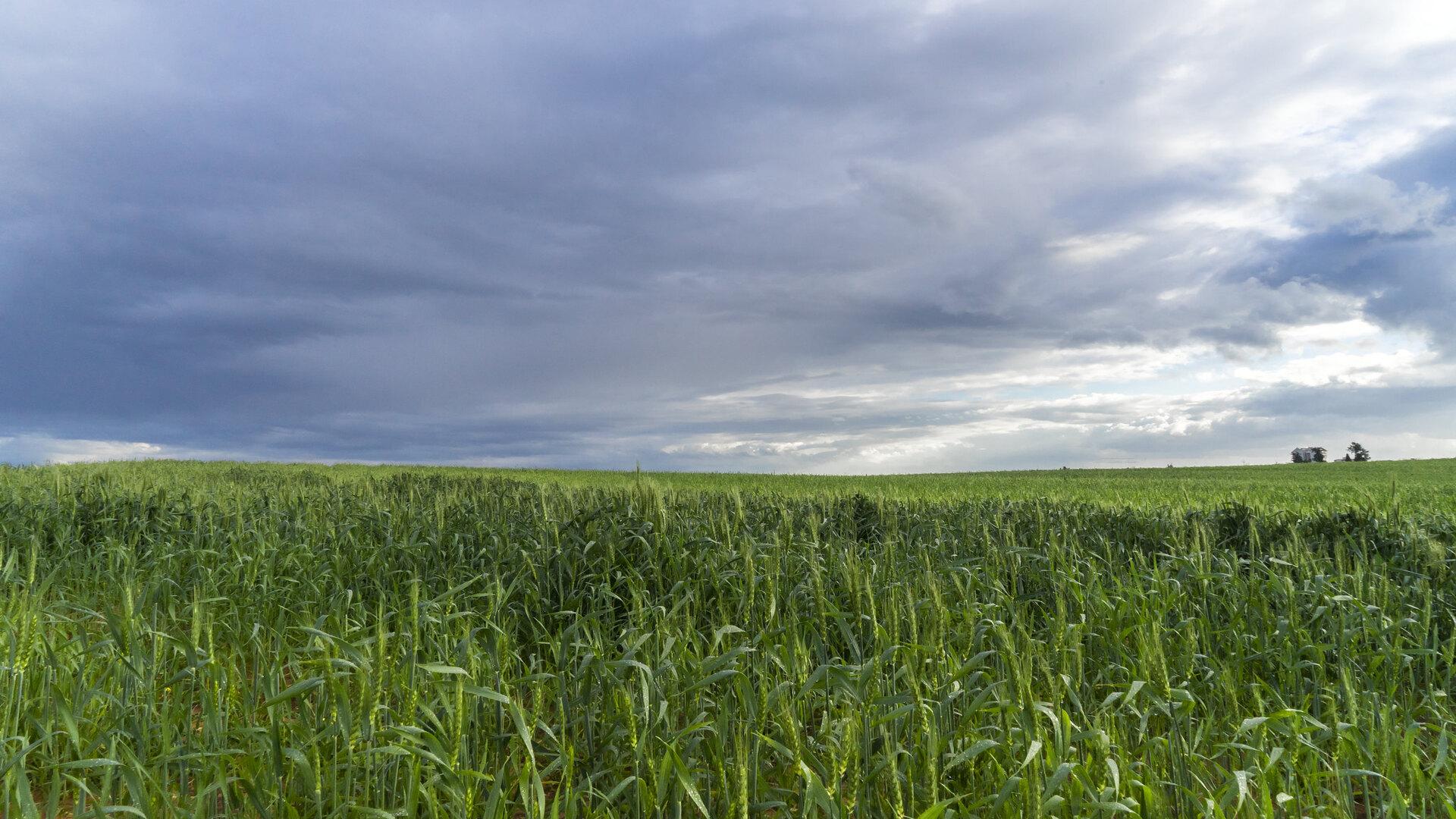 General 1920x1080 nature landscape sky clouds field wheat