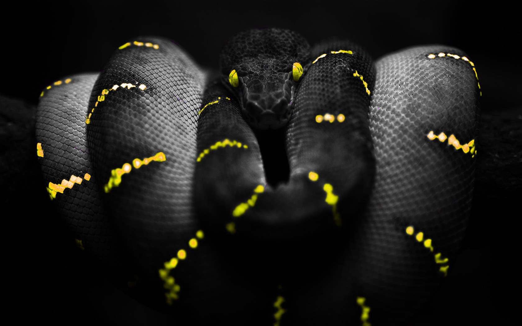 General 1680x1050 snake selective coloring Boa constrictor yellow yellow eyes reptile animals digital art