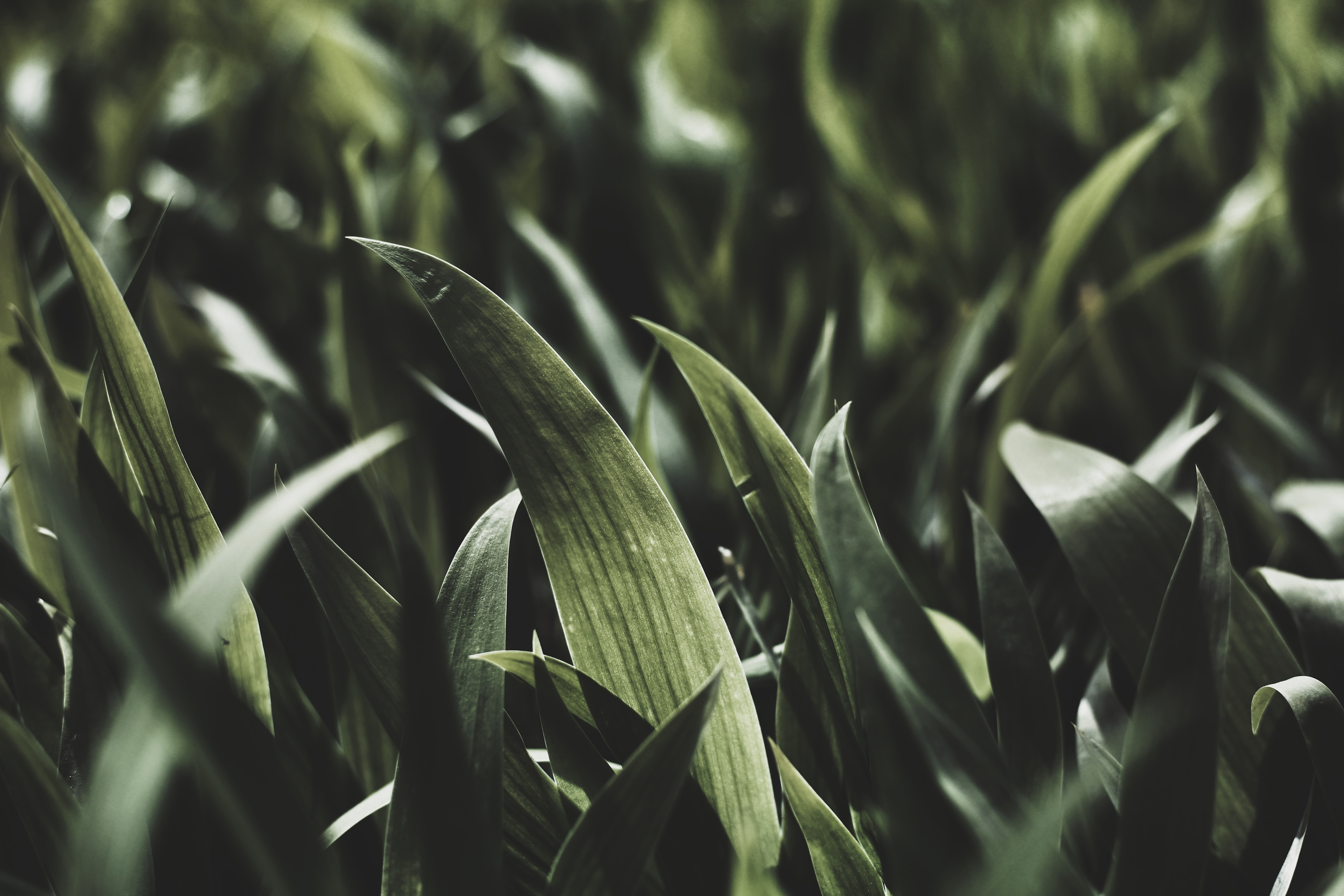 General 5472x3648 plants green nature leaves photography depth of field