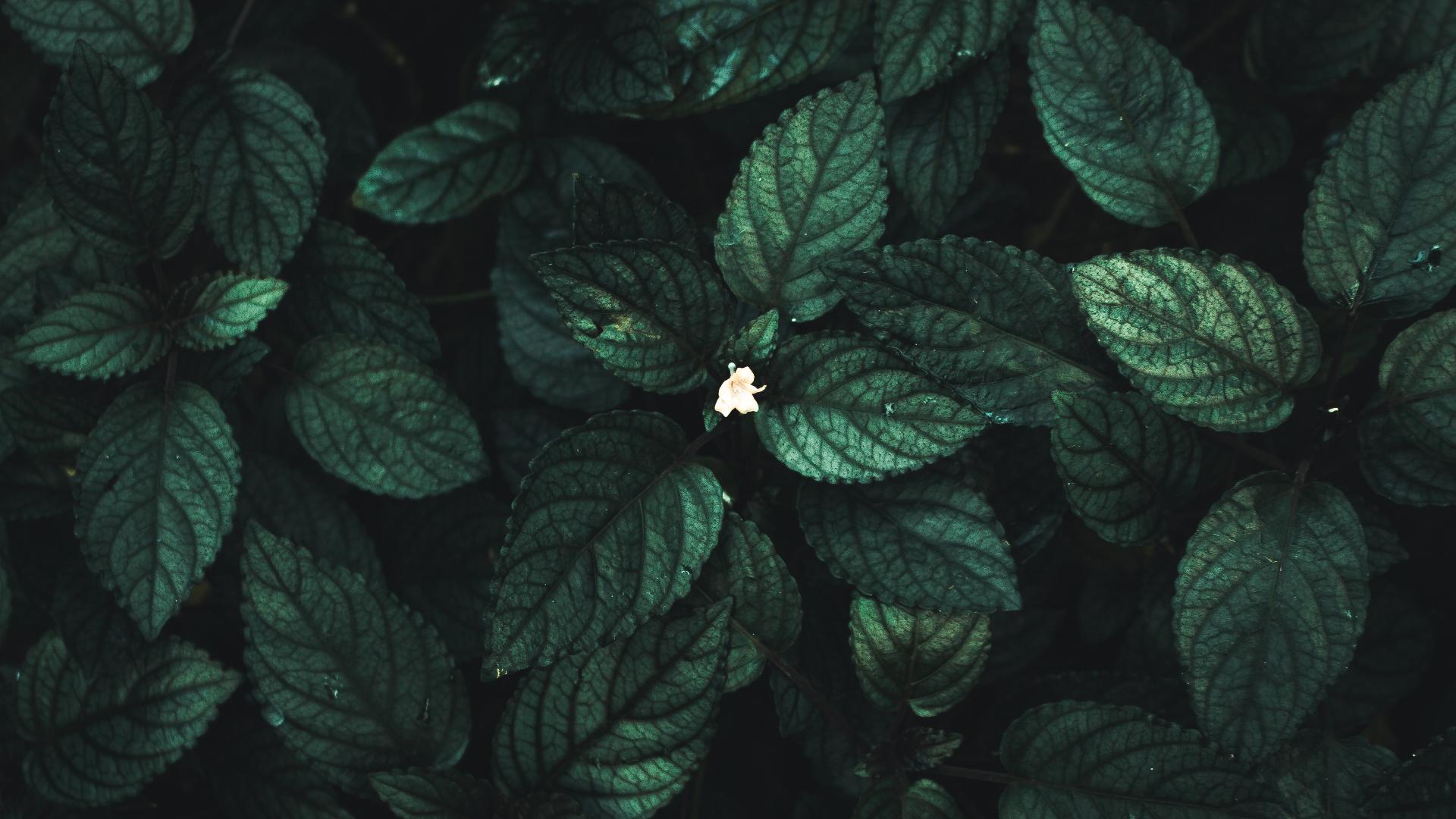 General 1920x1080 macro leaves flowers