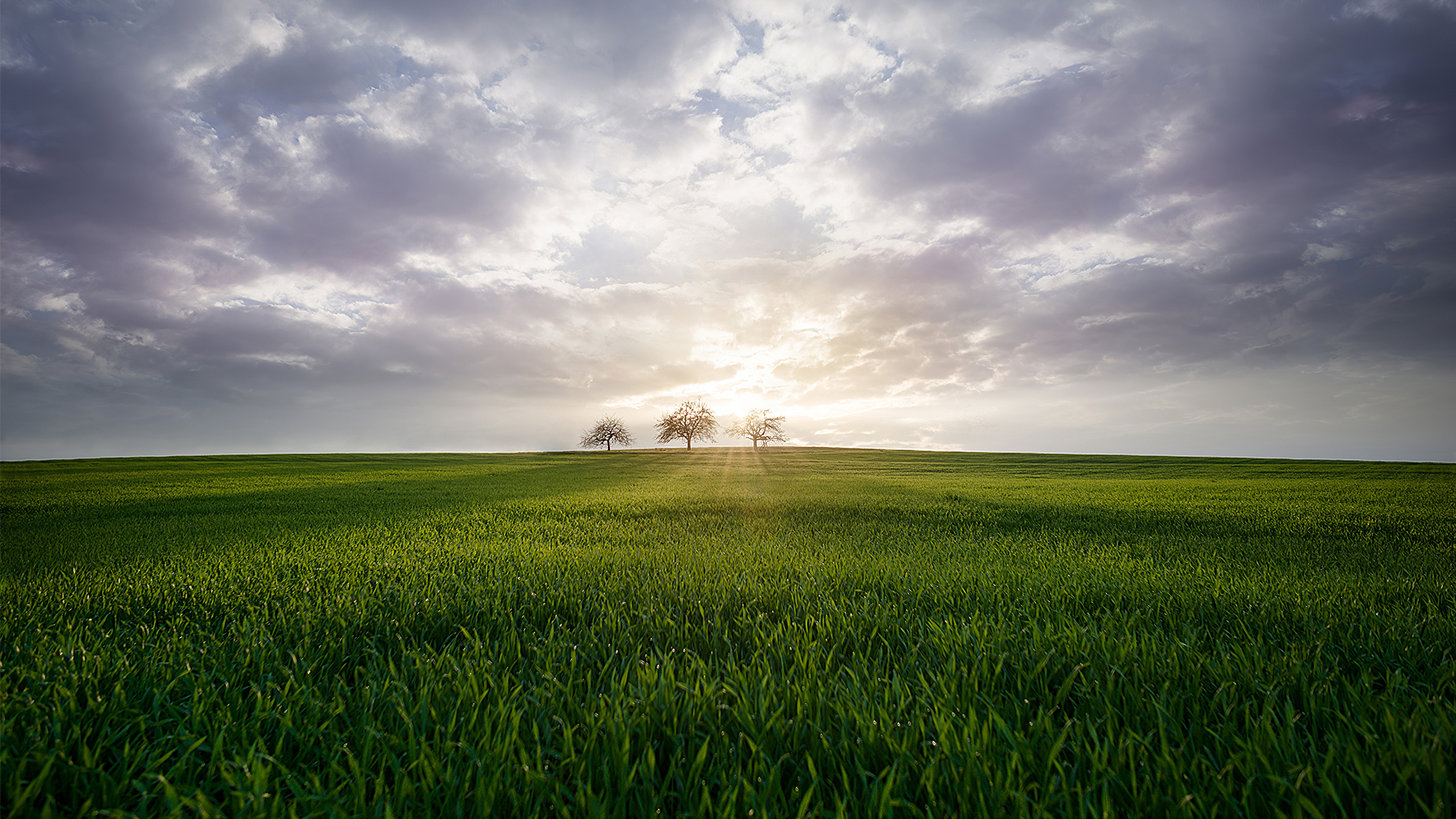 General 2560x1440 trees green grass nature field steppe landscape