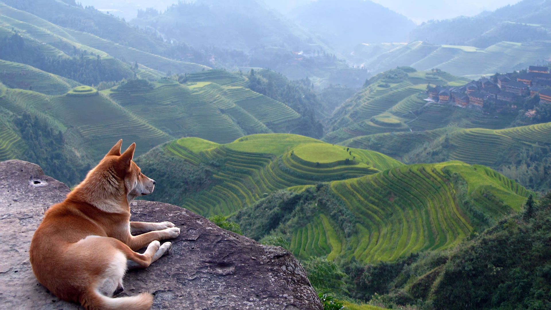 General 1920x1080 dog landscape outdoors animals mammals