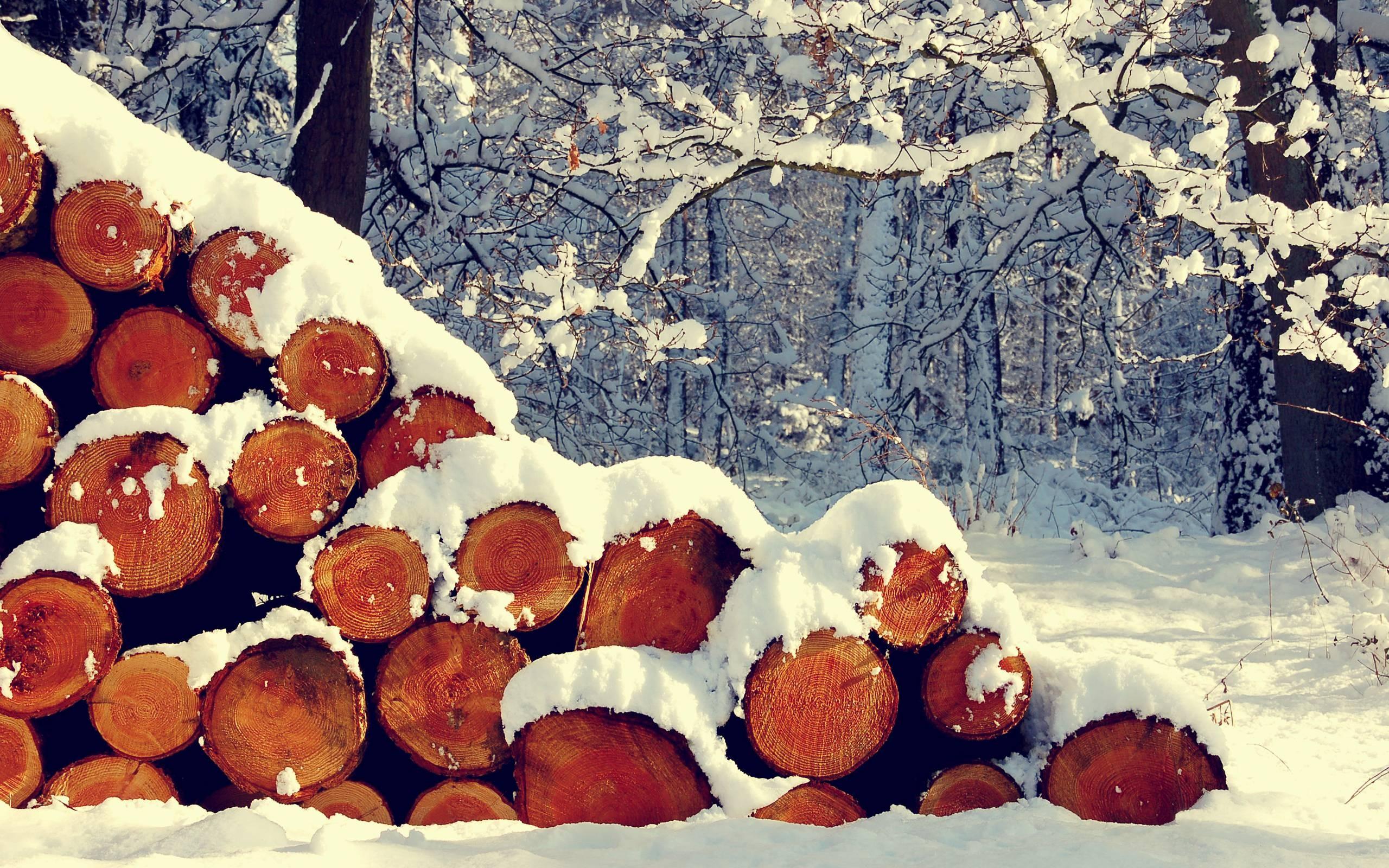 General 2560x1600 snow plants forest winter log metra