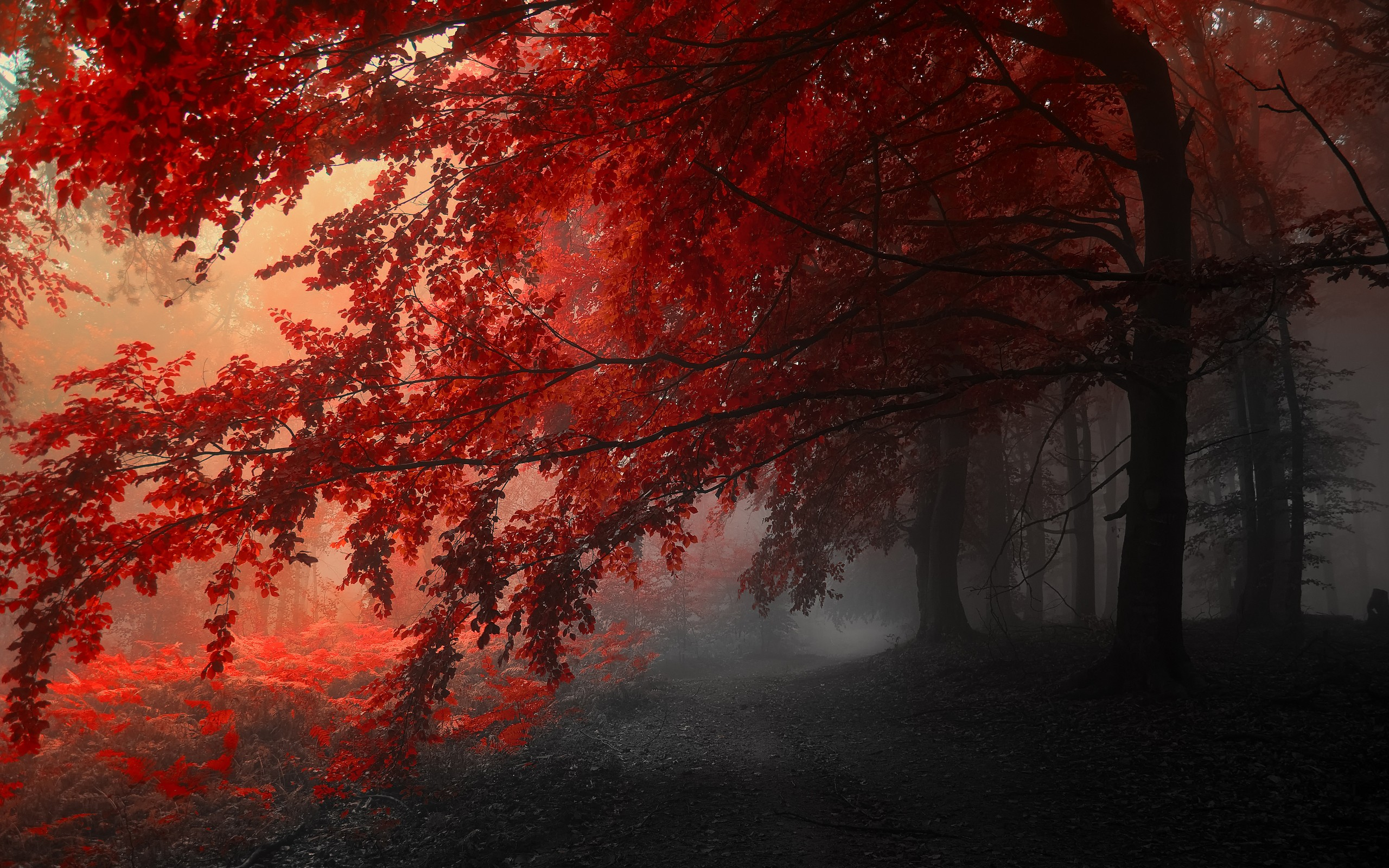General 2560x1600 forest trees red leaves mist selective coloring nature