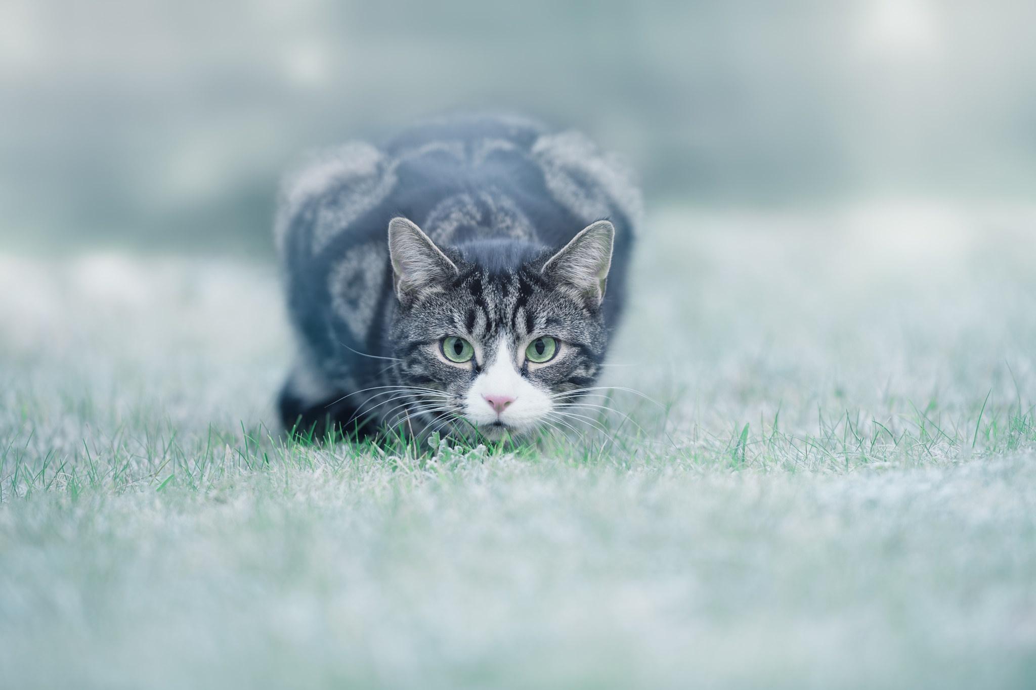 General 2048x1365 animals cats grass