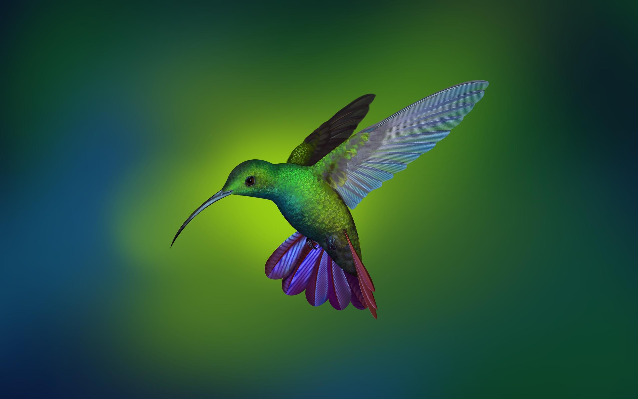General 2560x1600 hummingbird Linux animals birds