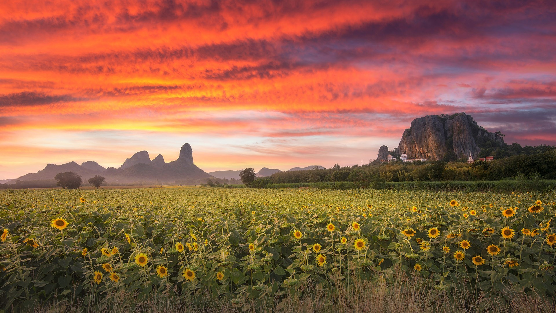 General 1920x1080 nature landscape mountains trees field clouds sunset plants sunflowers sky Thailand