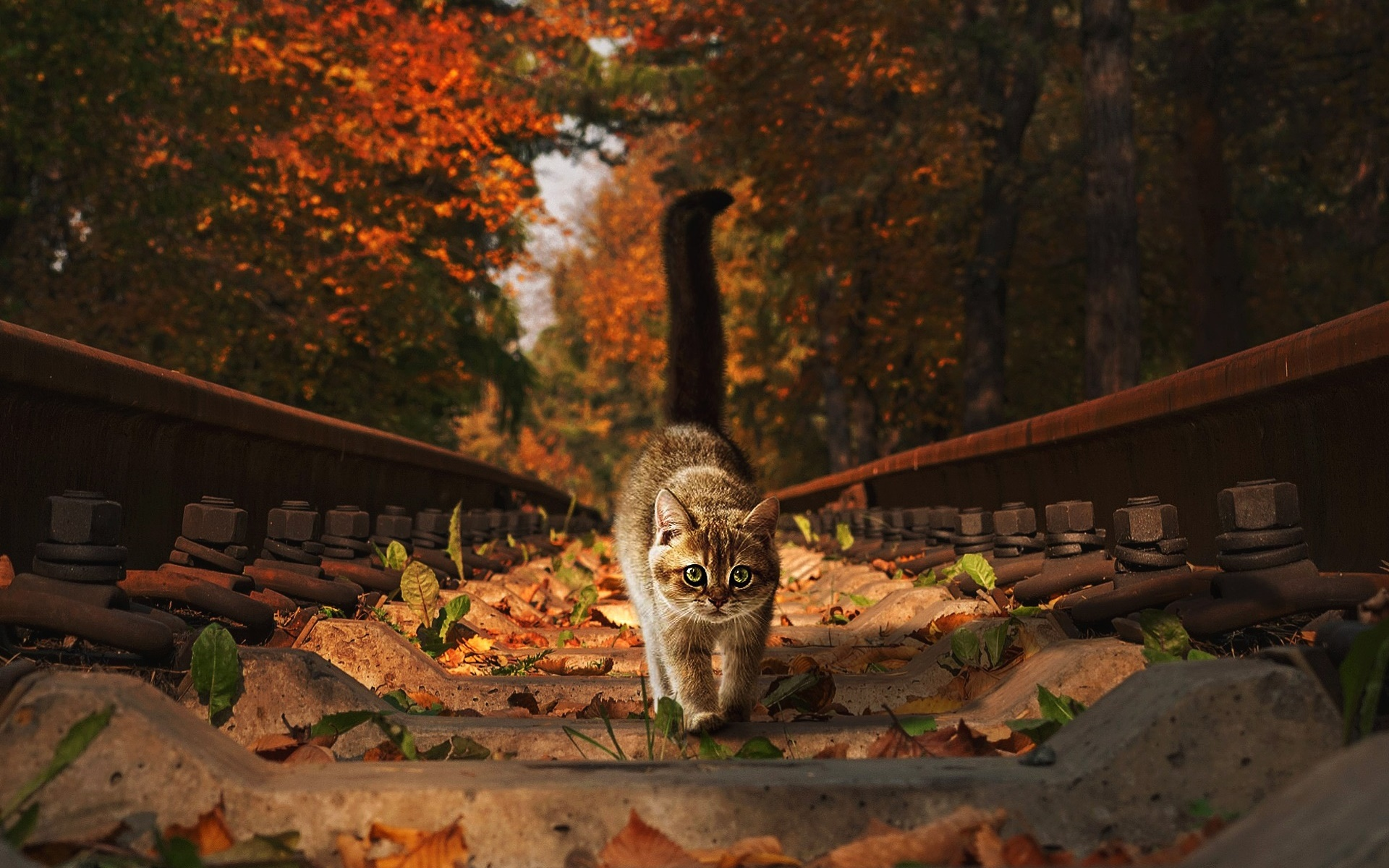 General 1920x1200 fall railroad track cats outdoors animals mammals