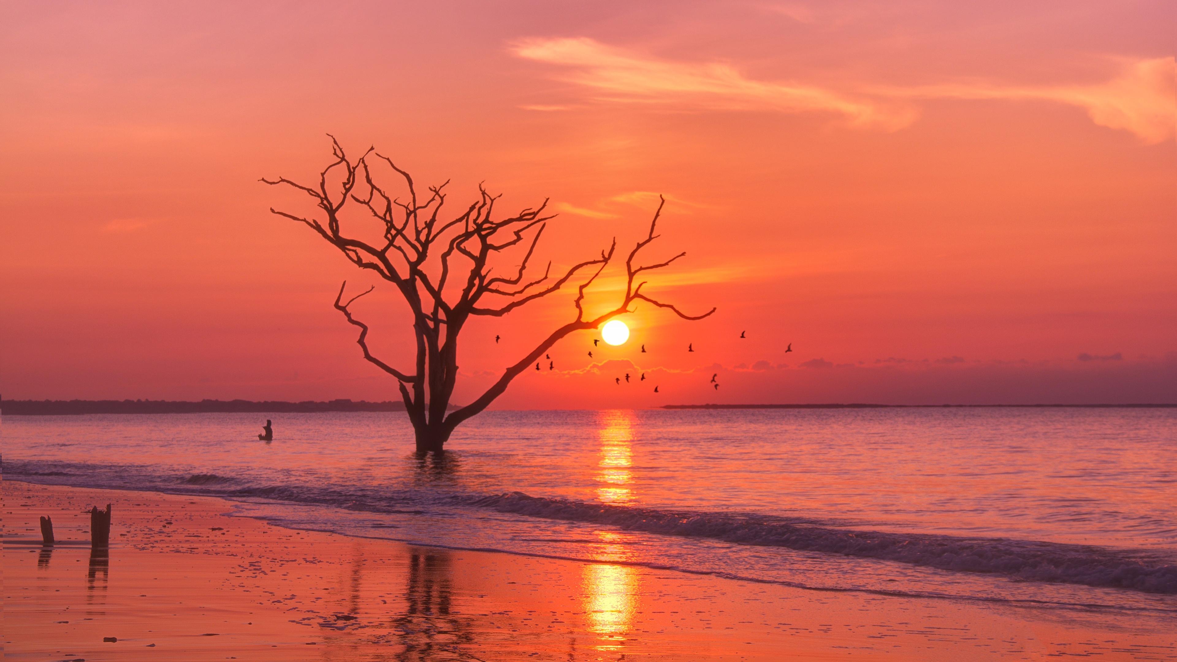 General 3840x2160 nature sunlight water sky trees sunset orange sky dead trees beach orange