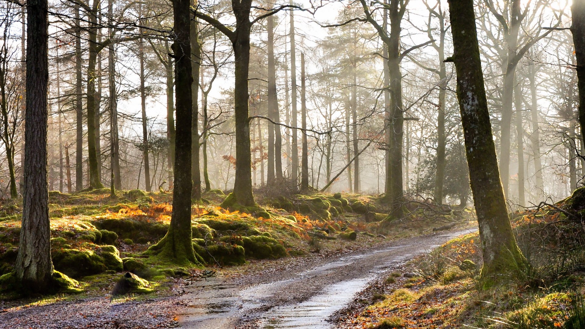 General 1920x1080 forest trees fall dirt road wet mist