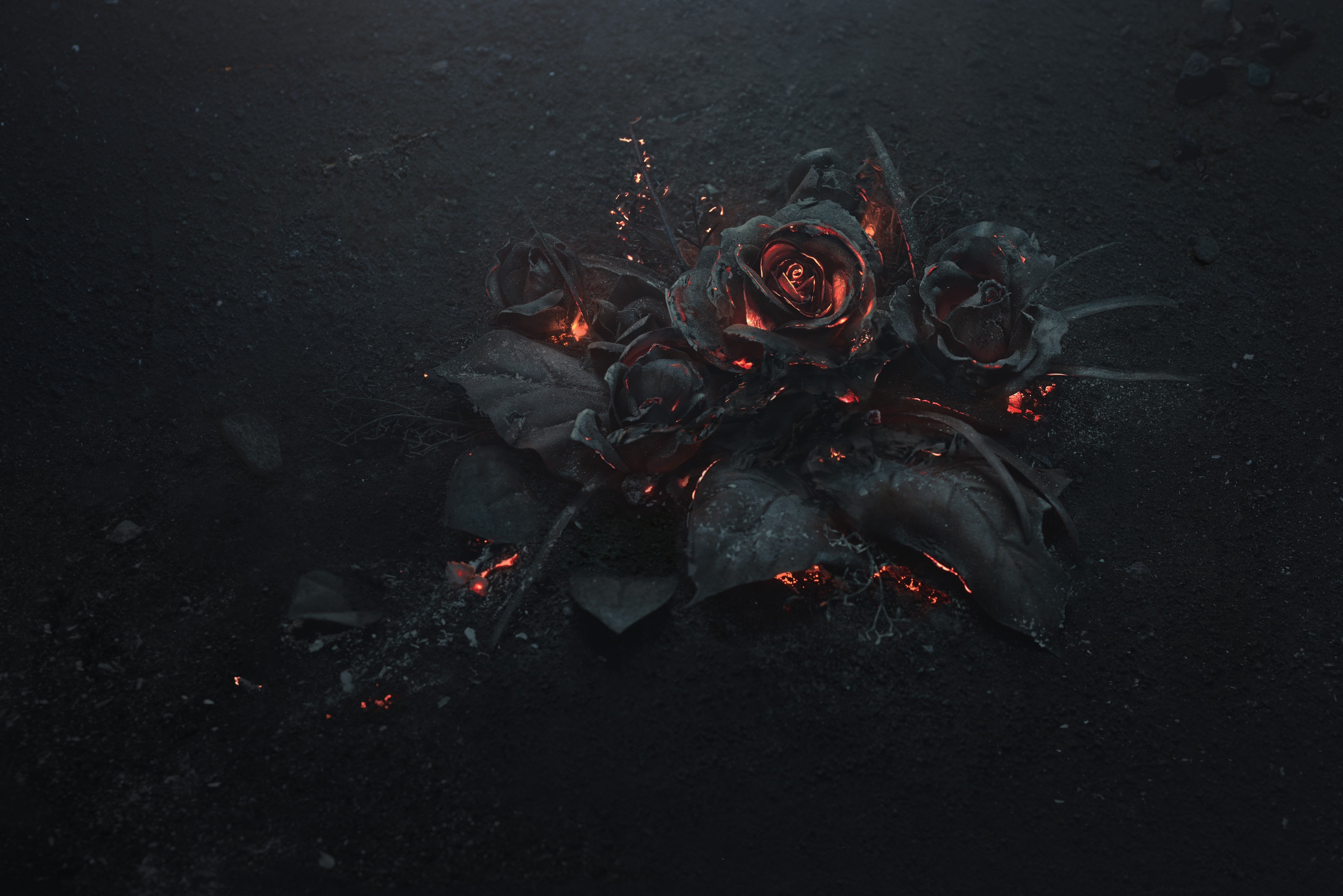 General 5000x3337 rose ash burning black abstract flowers fire
