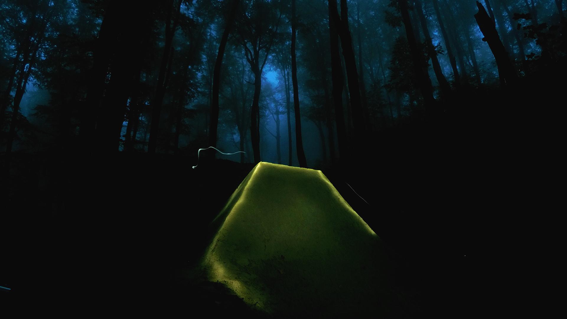 General 1920x1080 forest trees beech mist long exposure dusk nature