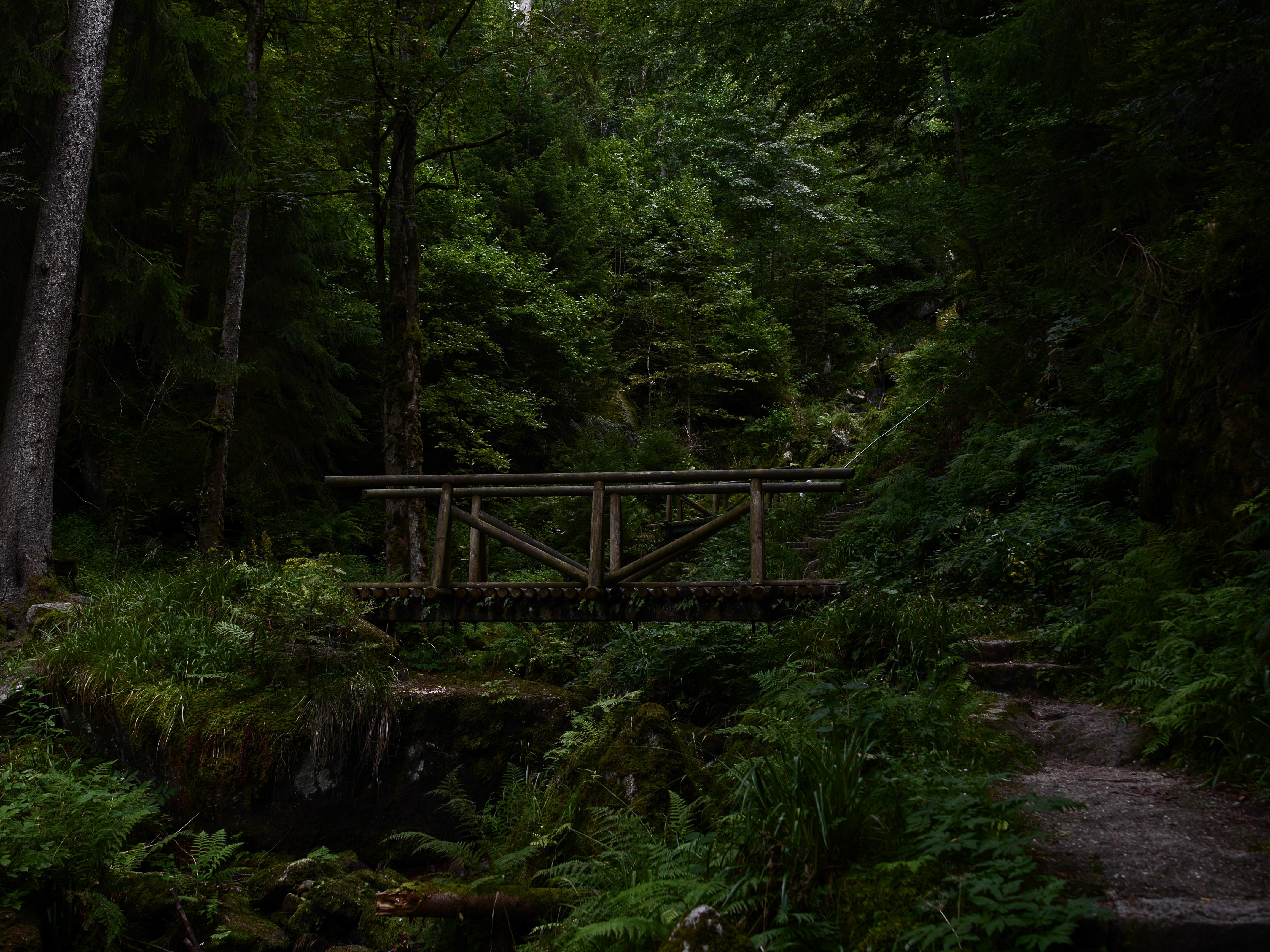 General 4608x3456 bridge forest nature