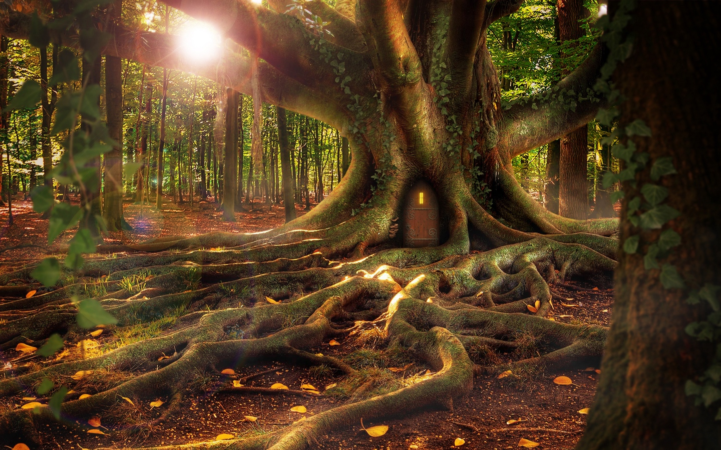General 1440x900 nature trees branch leaves Photoshop roots fallen leaves Sun door forest treehouse moss