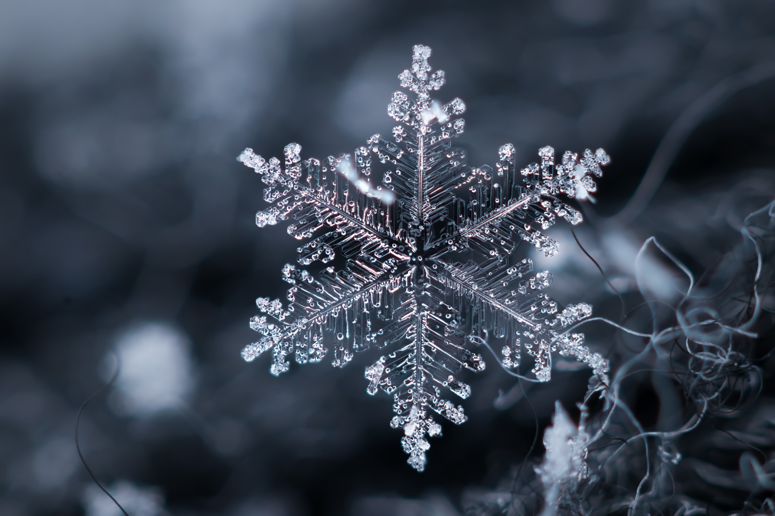 General 2560x1707 nature ice snowflake macro