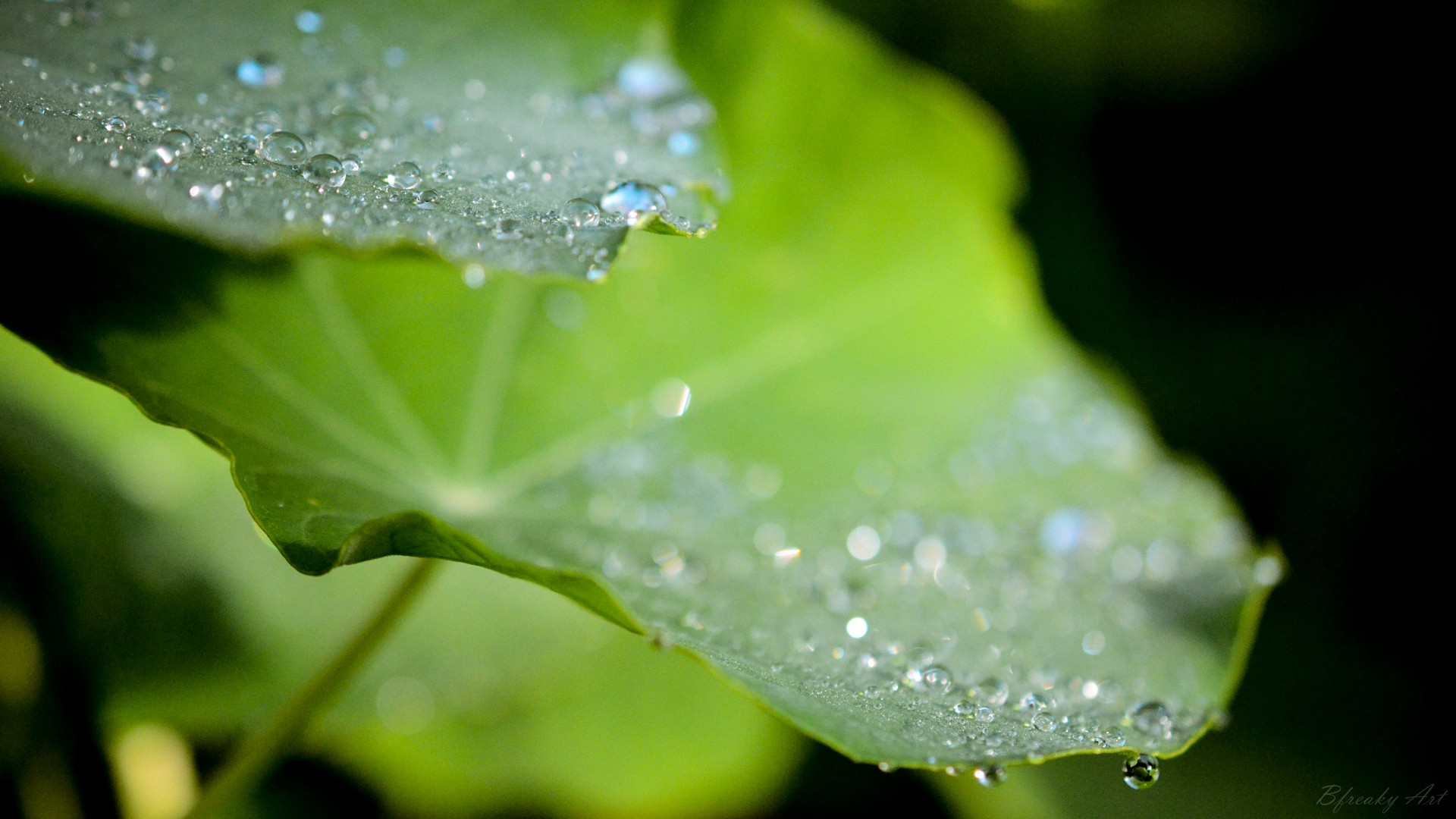 General 1920x1080 water drops leaves macro
