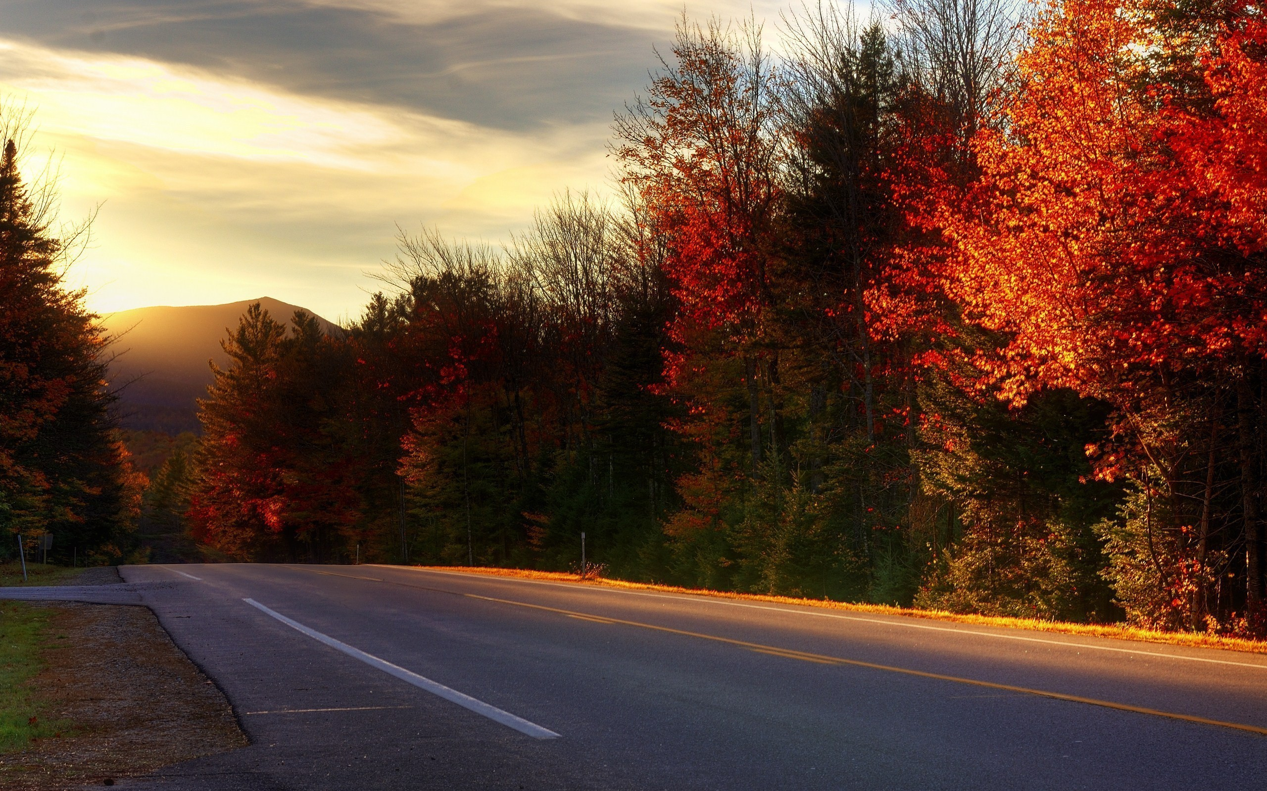 General 2560x1600 photography nature landscape road fall trees plants