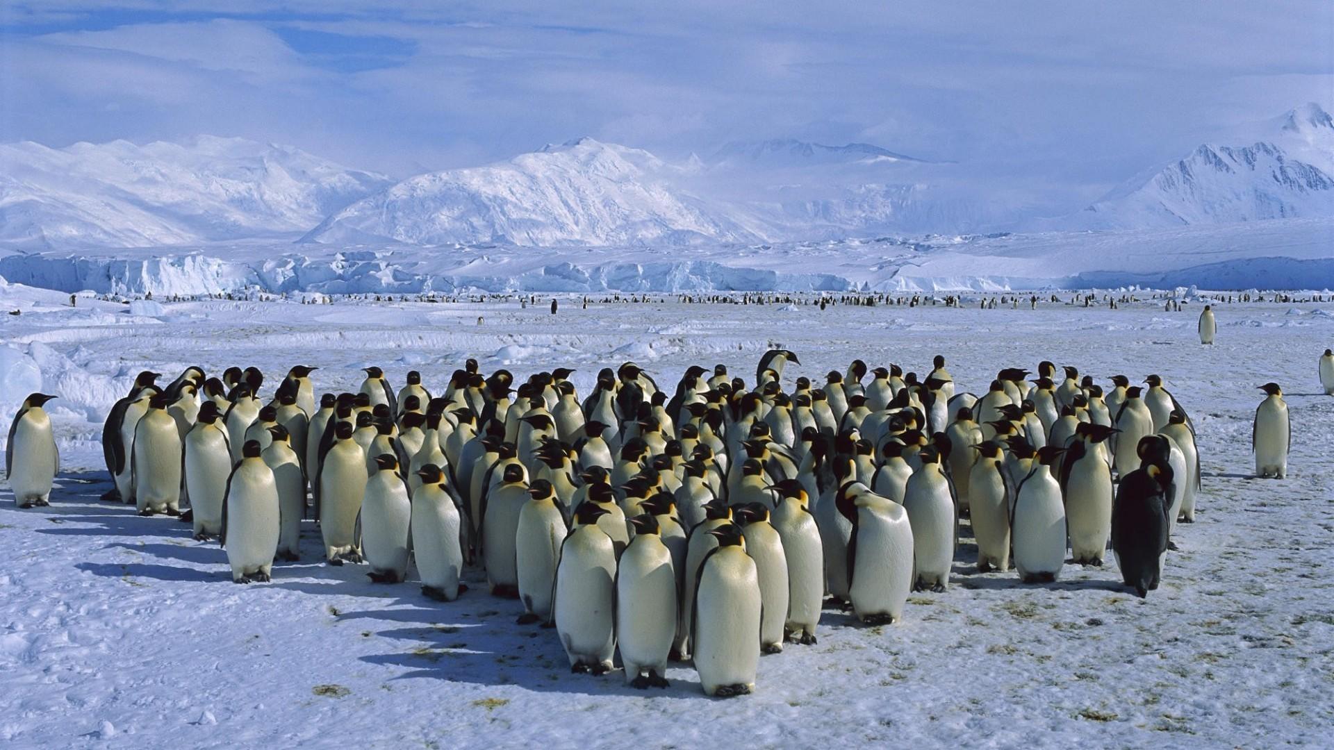 General 1920x1080 birds snow penguins Antarctica mountains