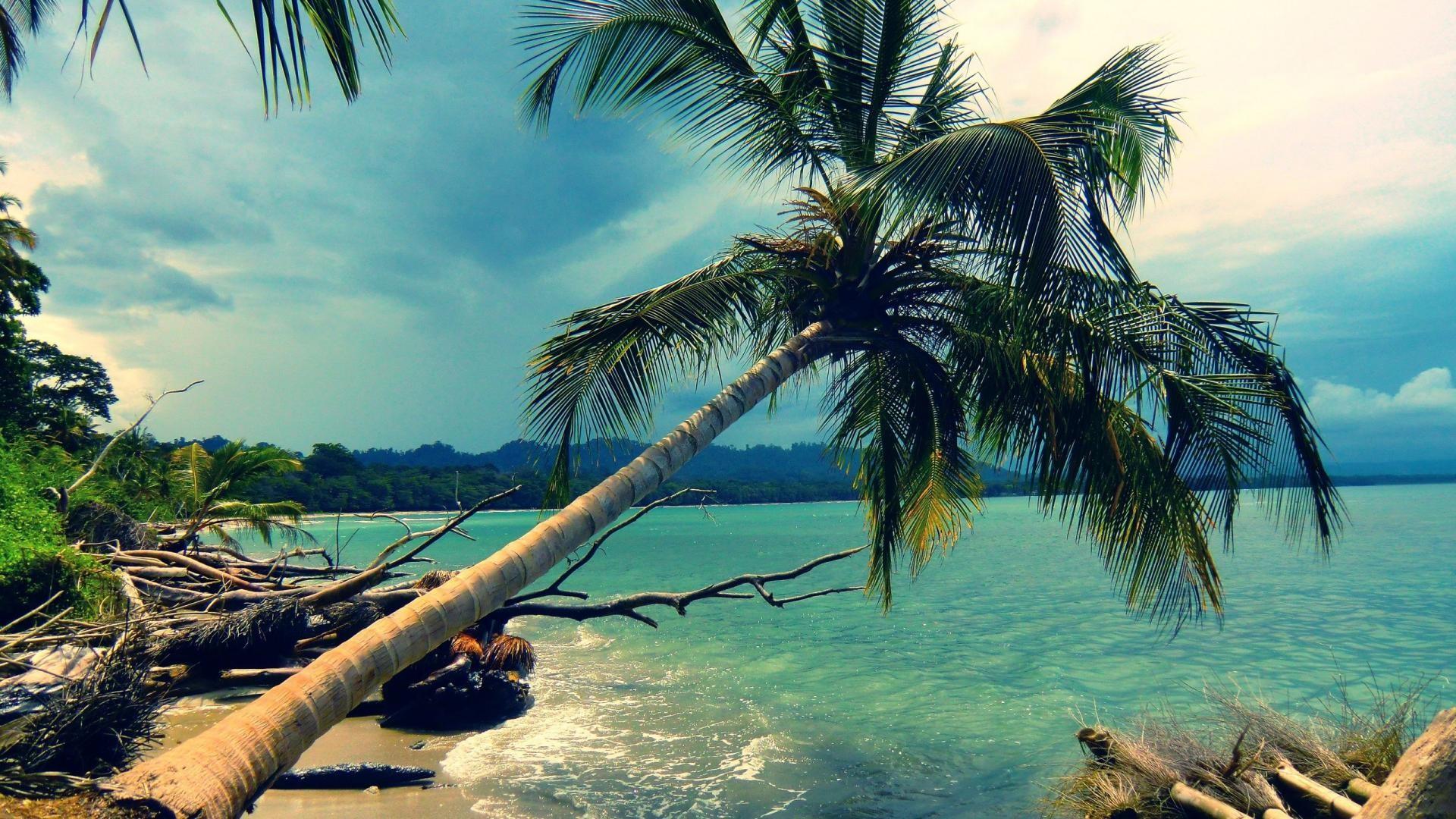 General 1920x1080 palm trees tropical sea coast