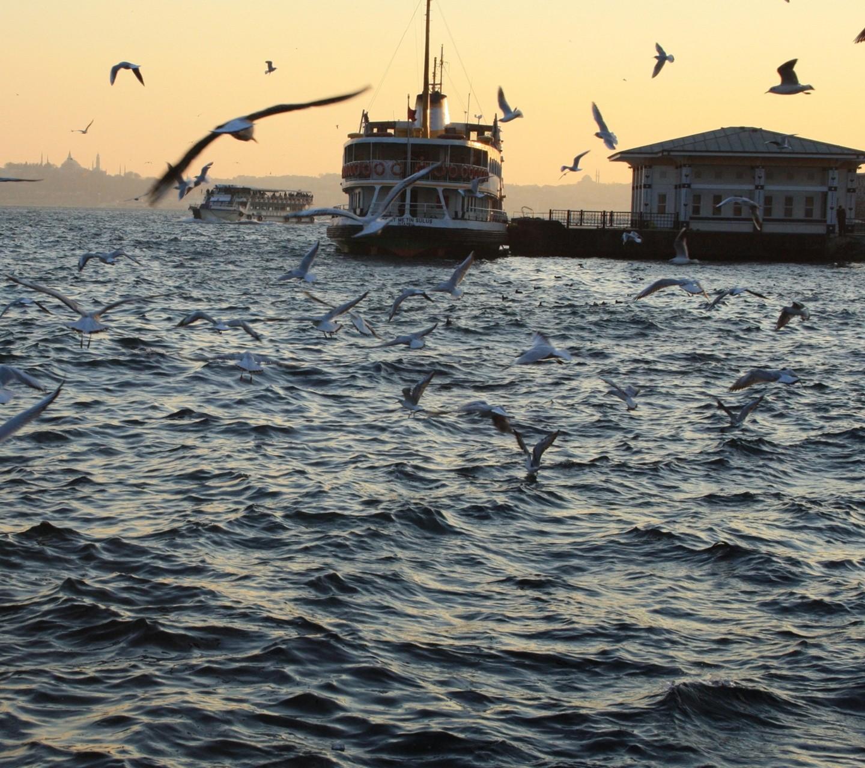 General 1440x1280 ship seagulls Bosphorus landscape