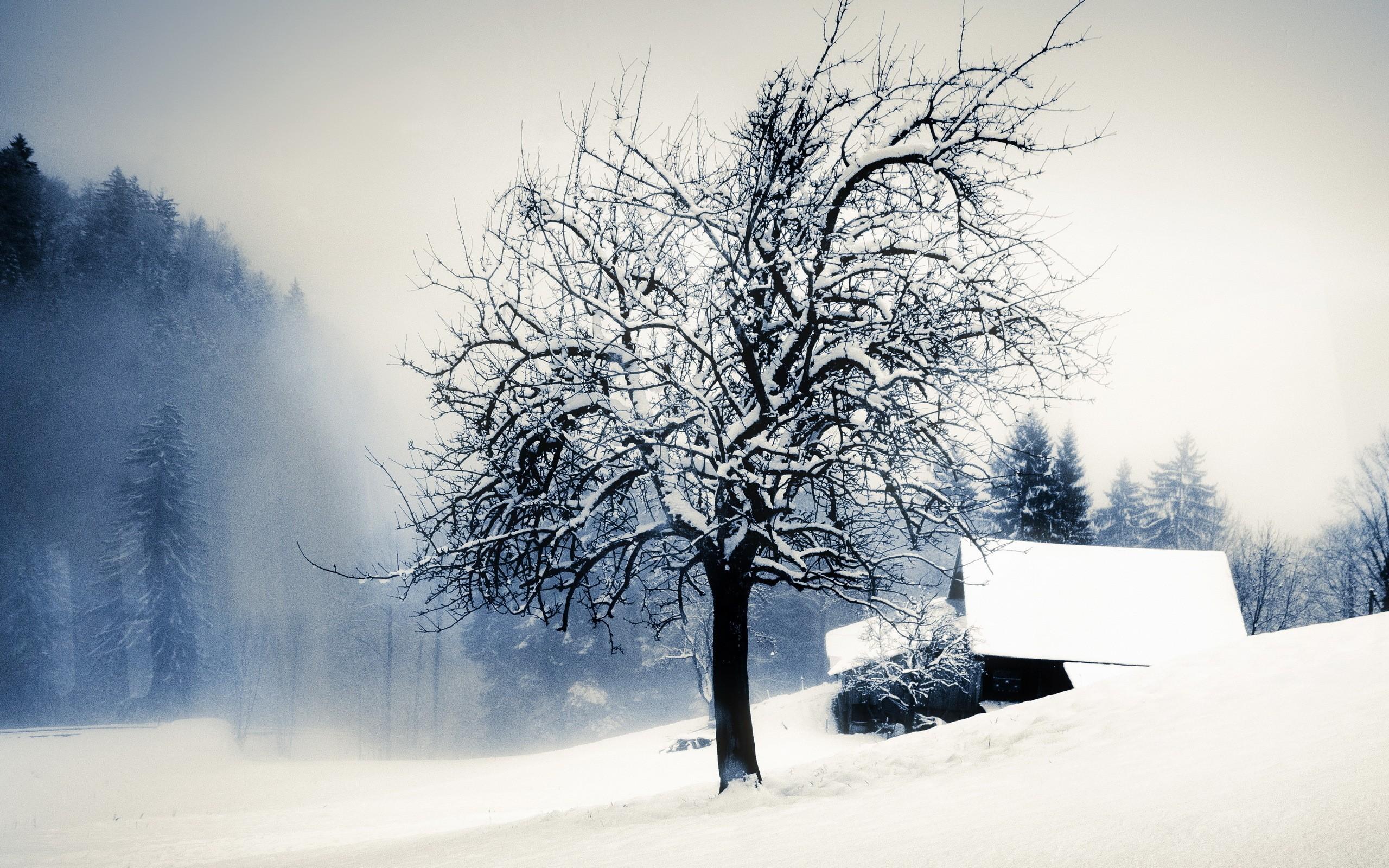 General 2560x1600 landscape trees nature winter snow