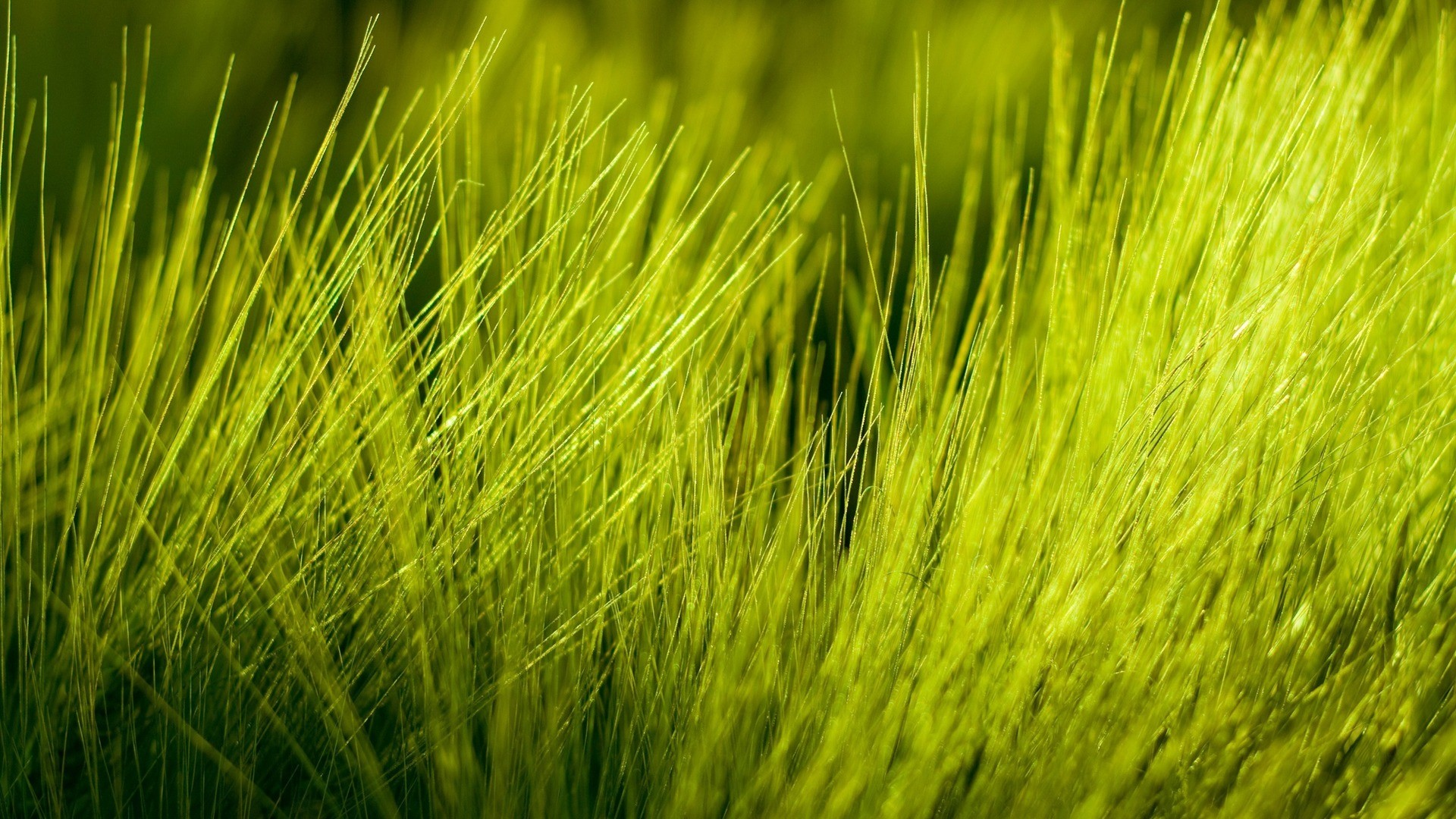General 1920x1080 nature grass green