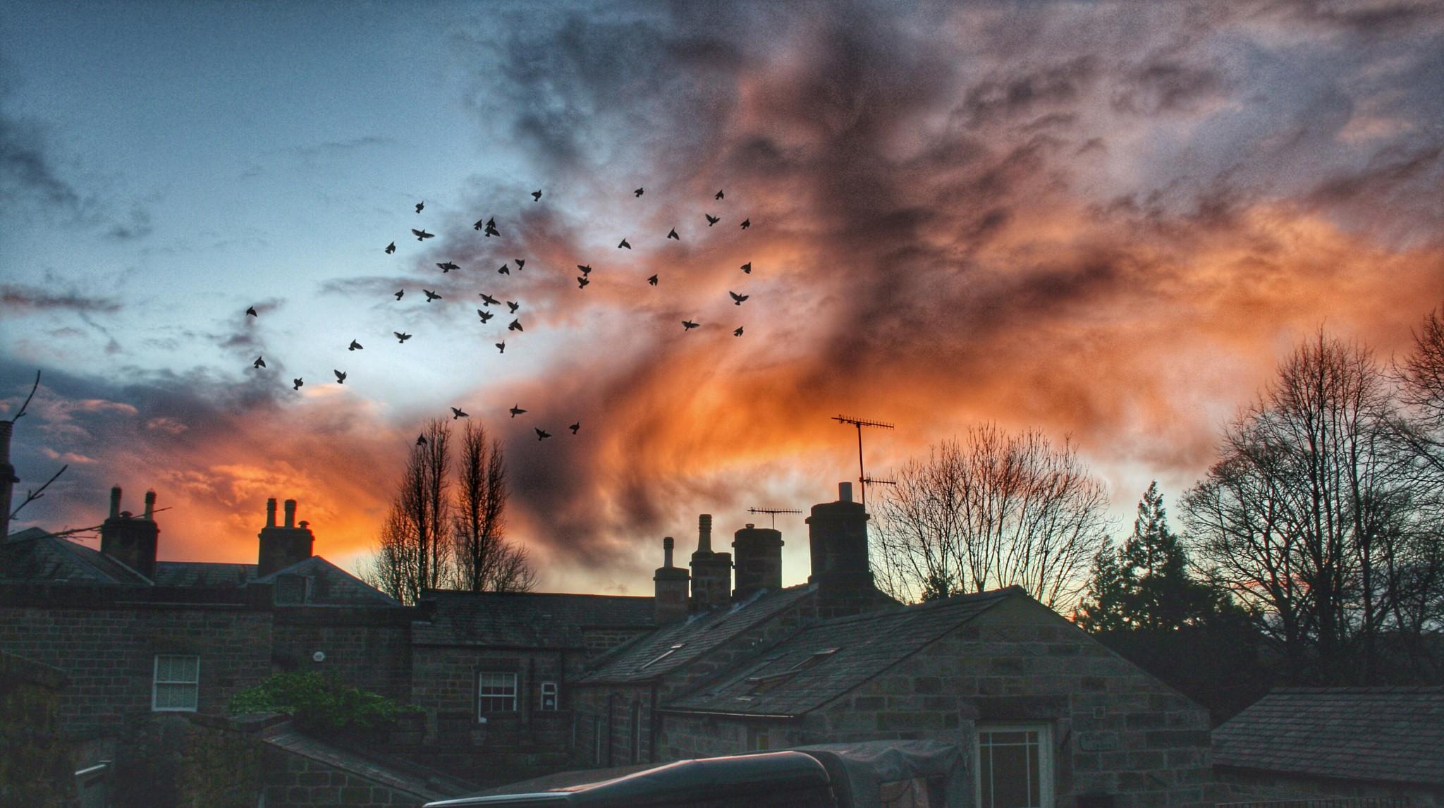 General 2048x1146 urban birds rooftops dusk