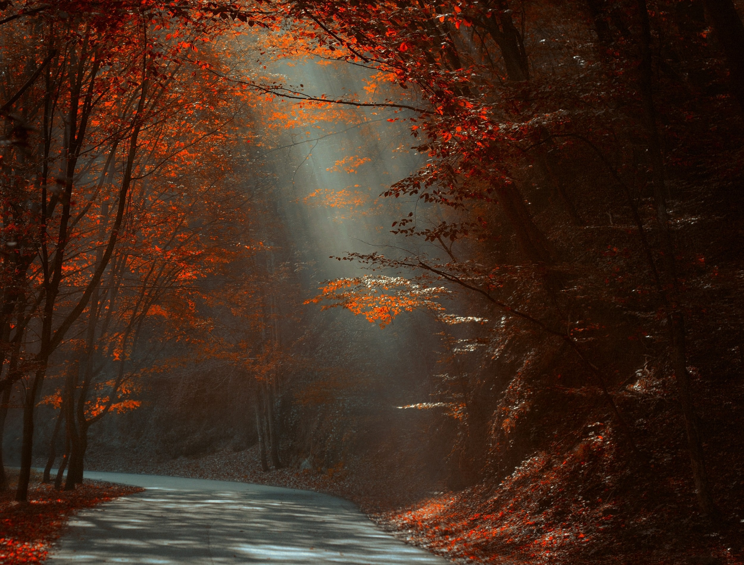 General 2500x1900 nature landscape road forest red leaves fall sun rays sunlight trees morning