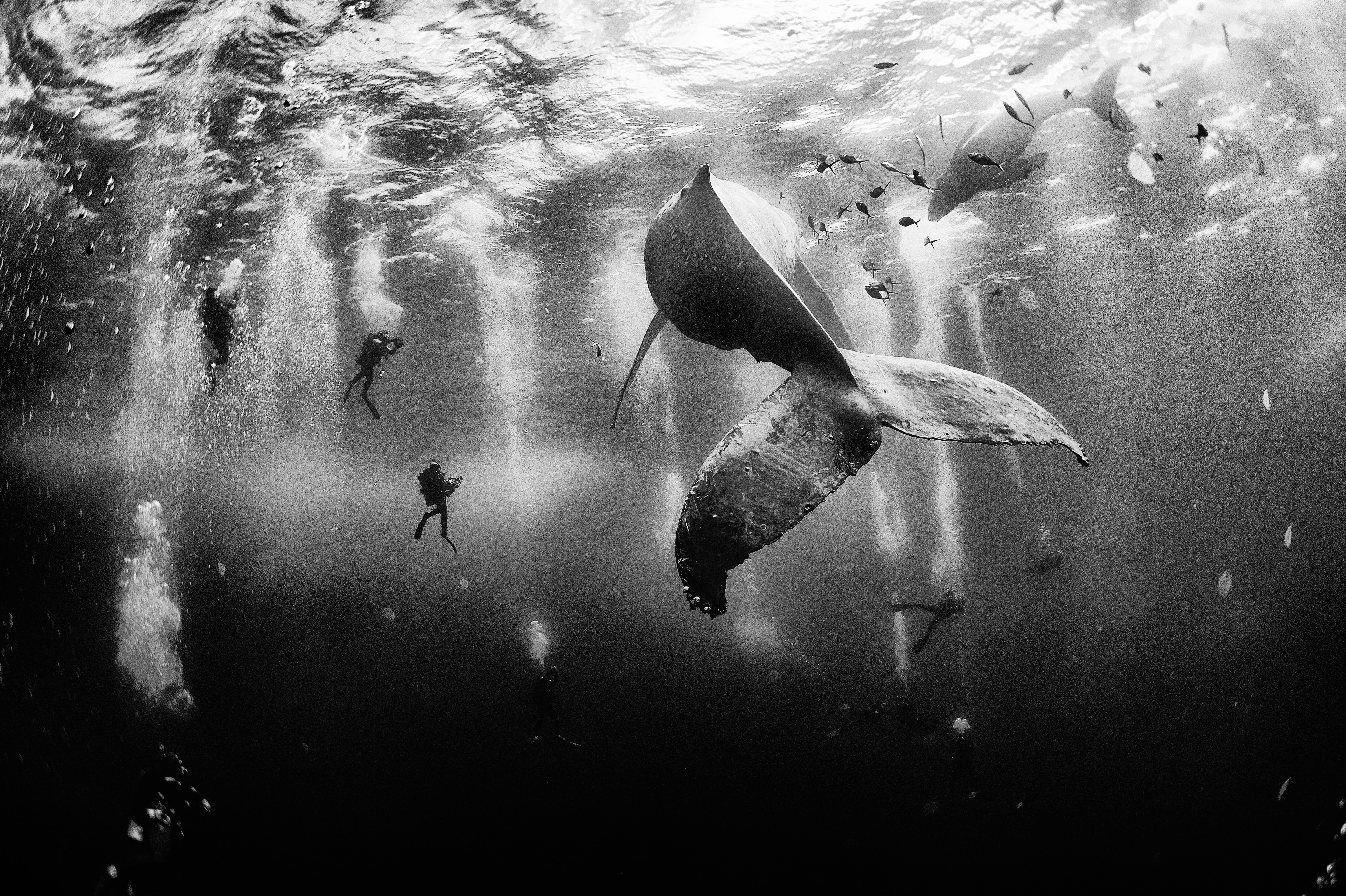 General 5000x3331 nature whale sea photographer National Geographic underwater divers monochrome bubbles fish