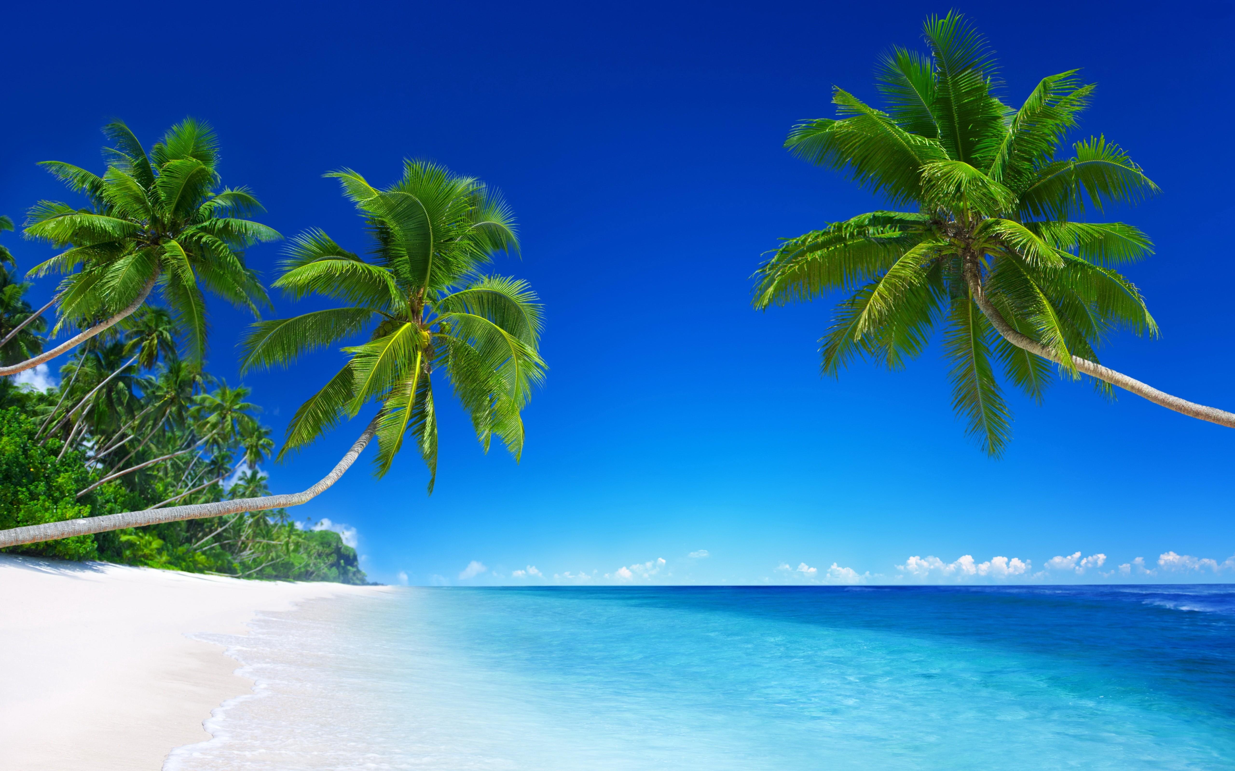 General 5120x3200 beach palm trees sea horizon blue trees water outdoors cyan sky tropical clear sky photo manipulation