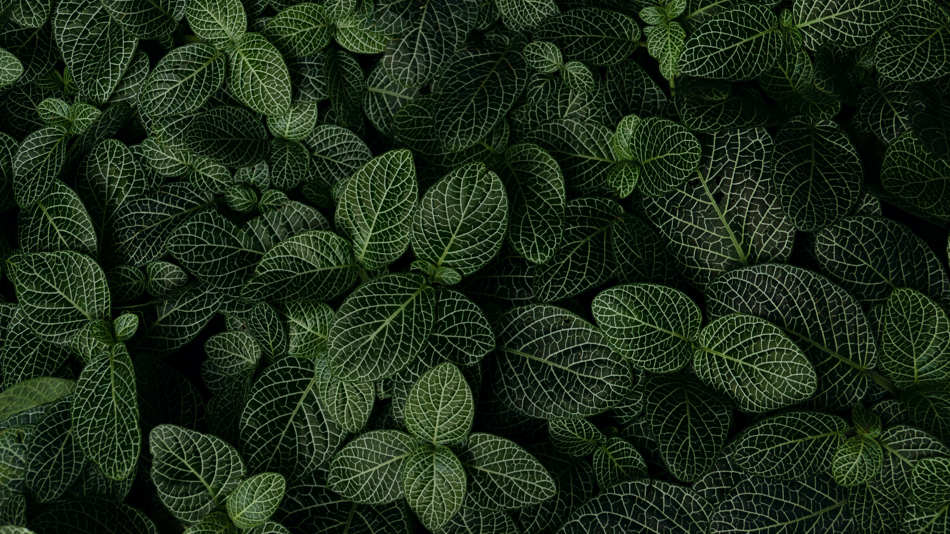 General 1920x1080 leaves plants macro fern