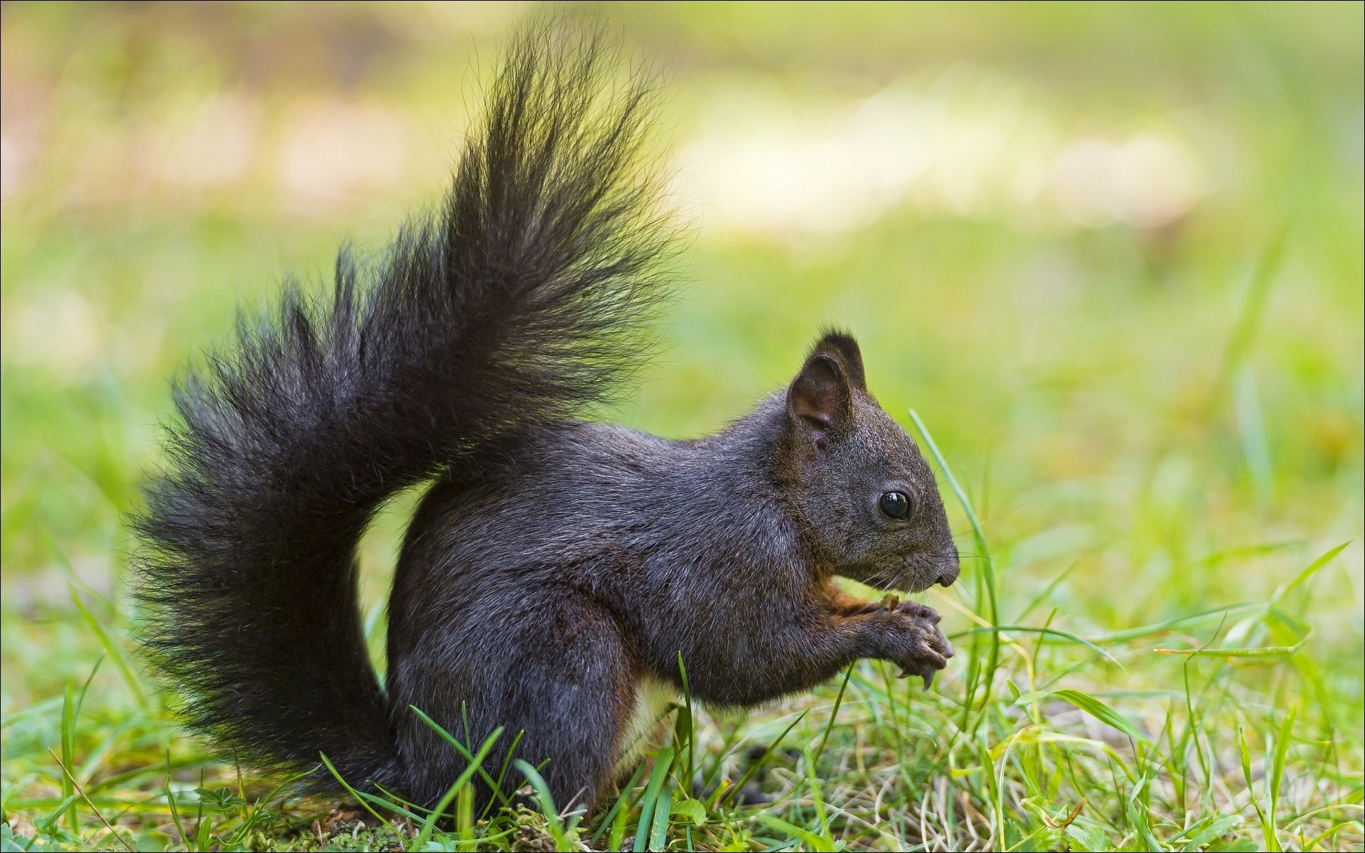 General 1920x1200 animals squirrel mammals wildlife nature