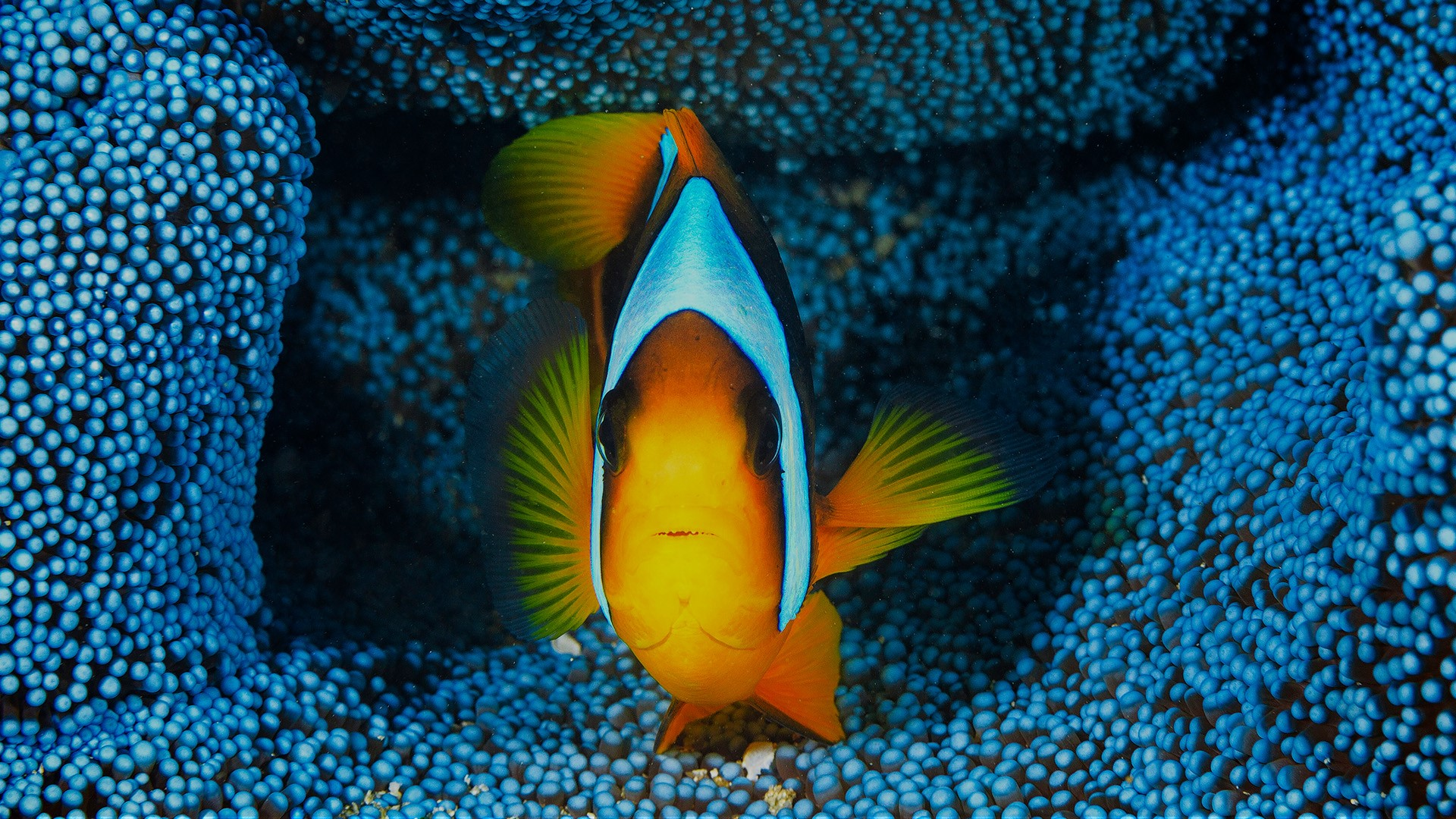 General 1920x1080 fish underwater animals colorful