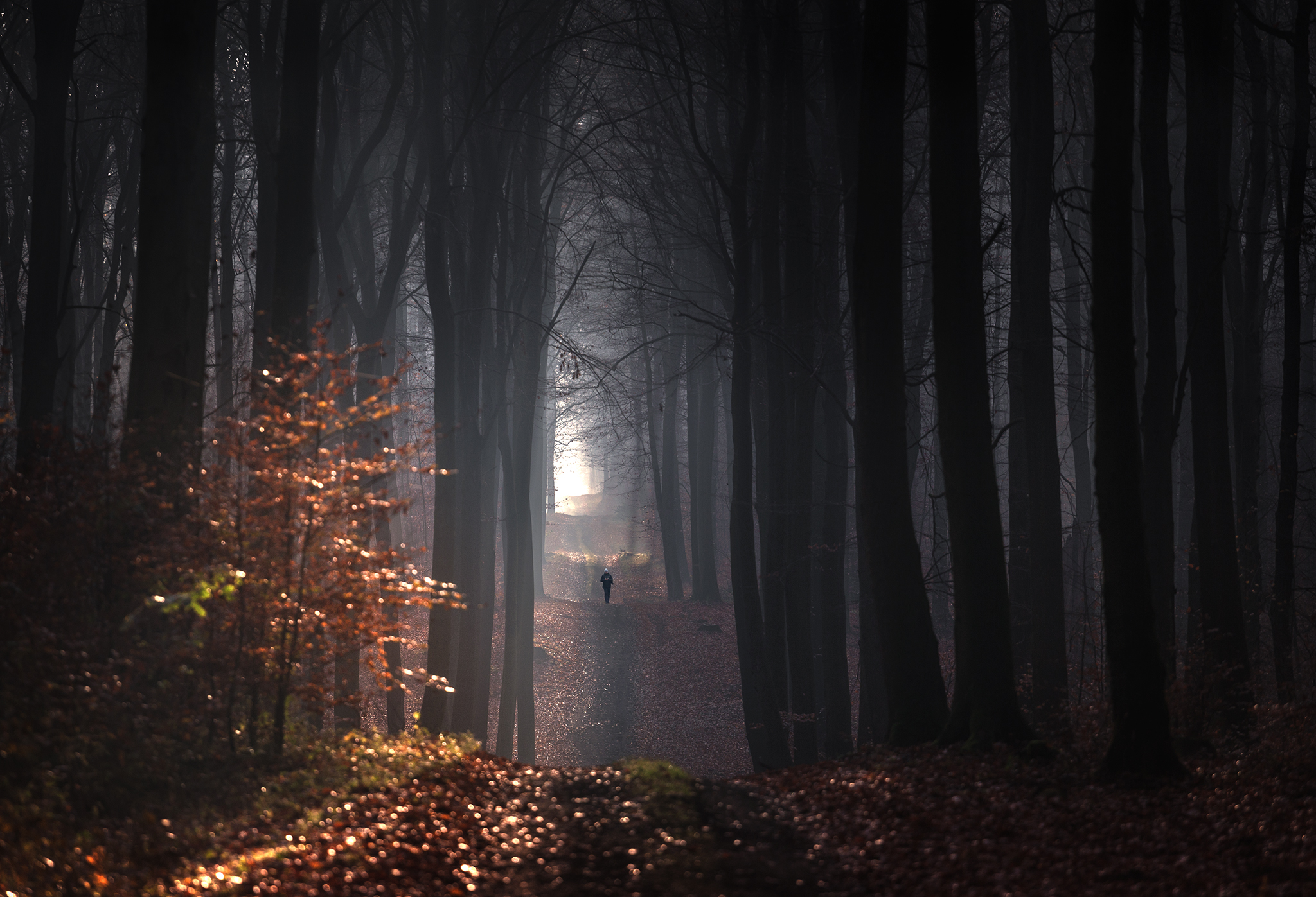 General 2048x1397 forest trees fall path people walking dappled sunlight nature outdoors photography landscape Pawel Olejniczak