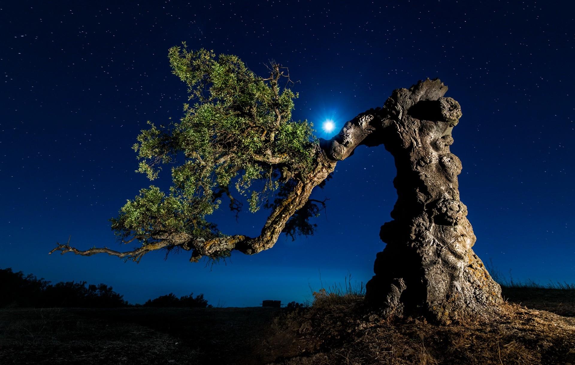 General 1920x1219 landscape trees nature moon rays night starry night night sky stars blue sky branch