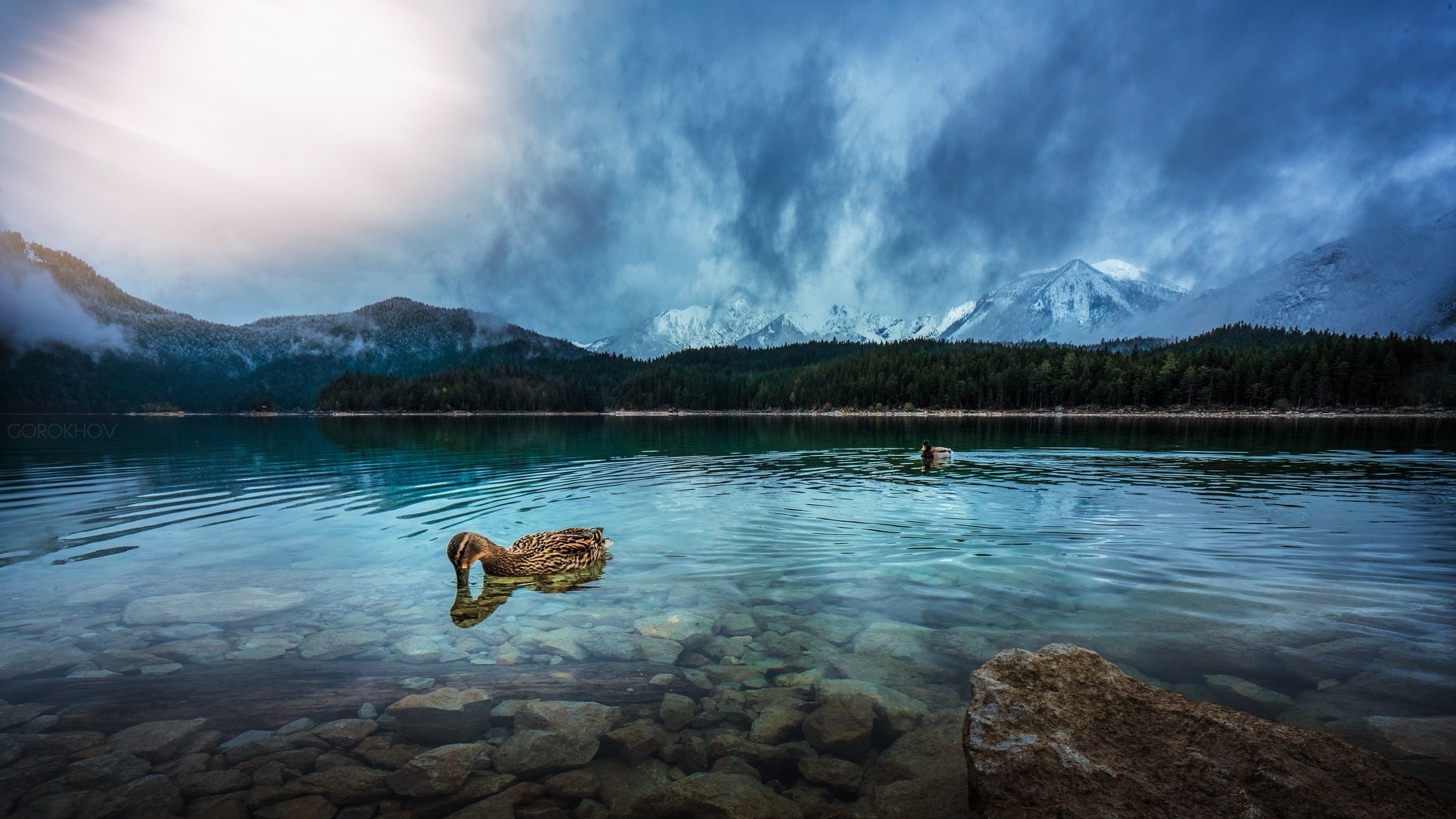 General 2048x1152 Ivan Gorokhov nature duck animals water mountains 500px cyan
