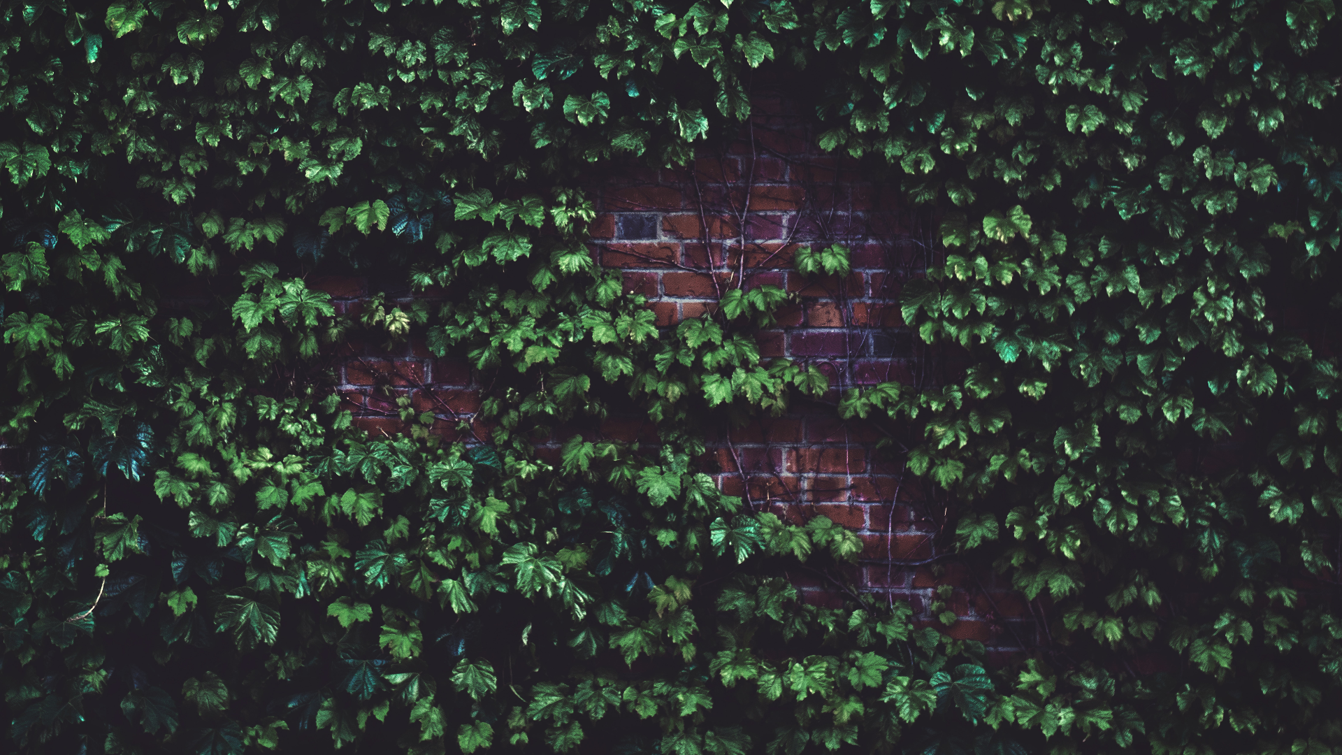 General 1920x1080 leaves bricks wall green facade