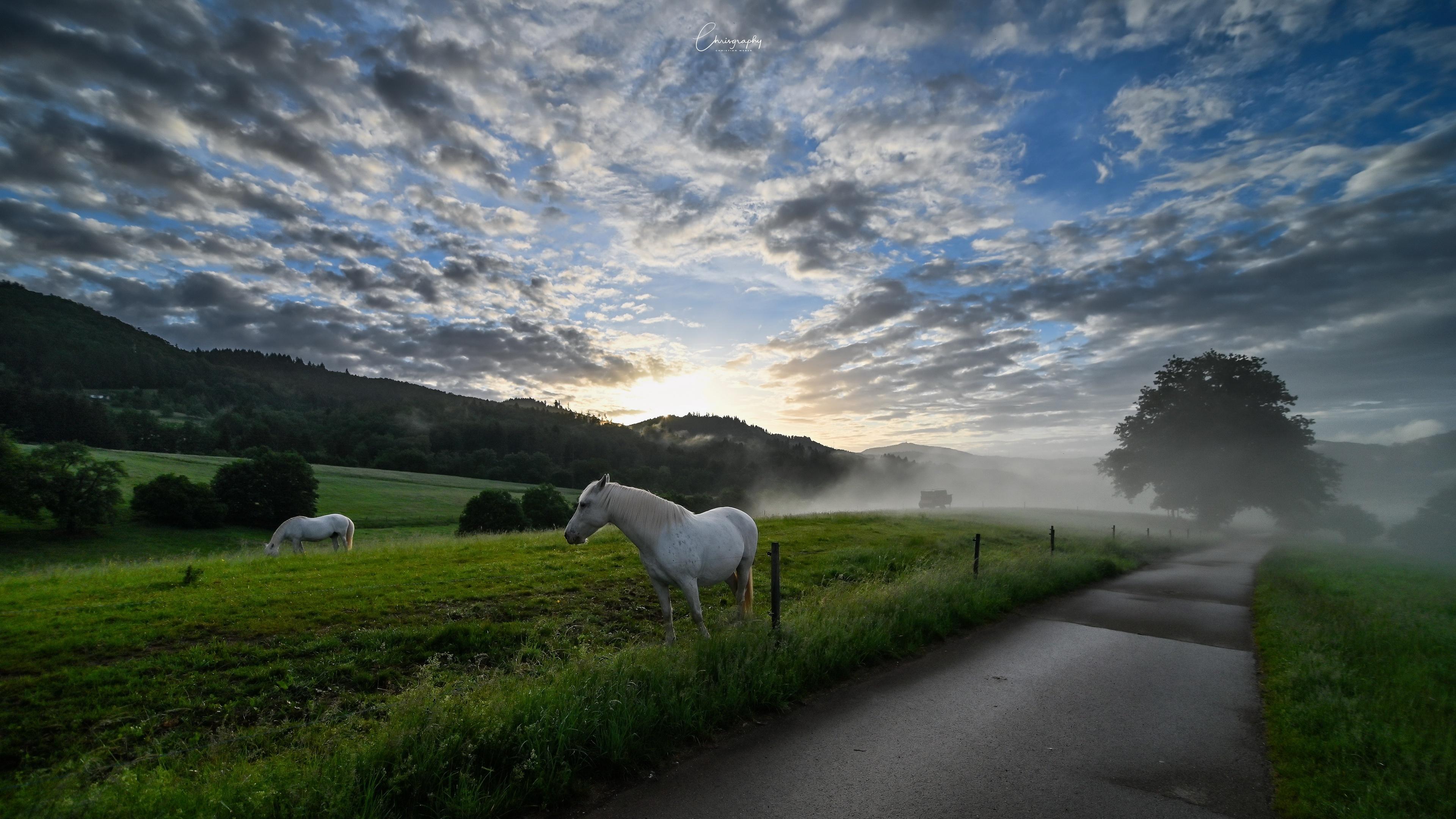 General 3840x2160 sky outdoors road animals clouds sunlight horse mammals