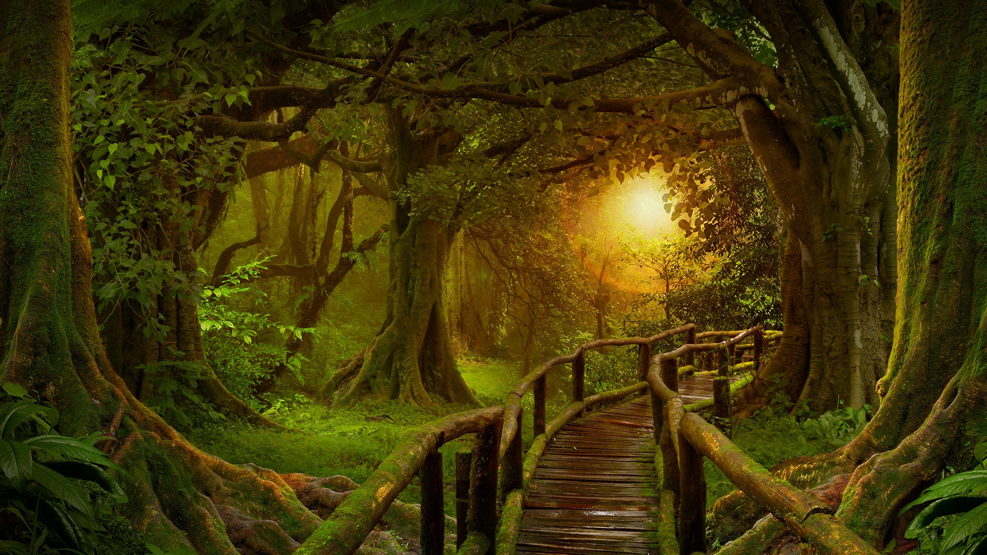General 1920x1080 nature landscape forest plants wooden bridge wood planks leaves trees Sun moss
