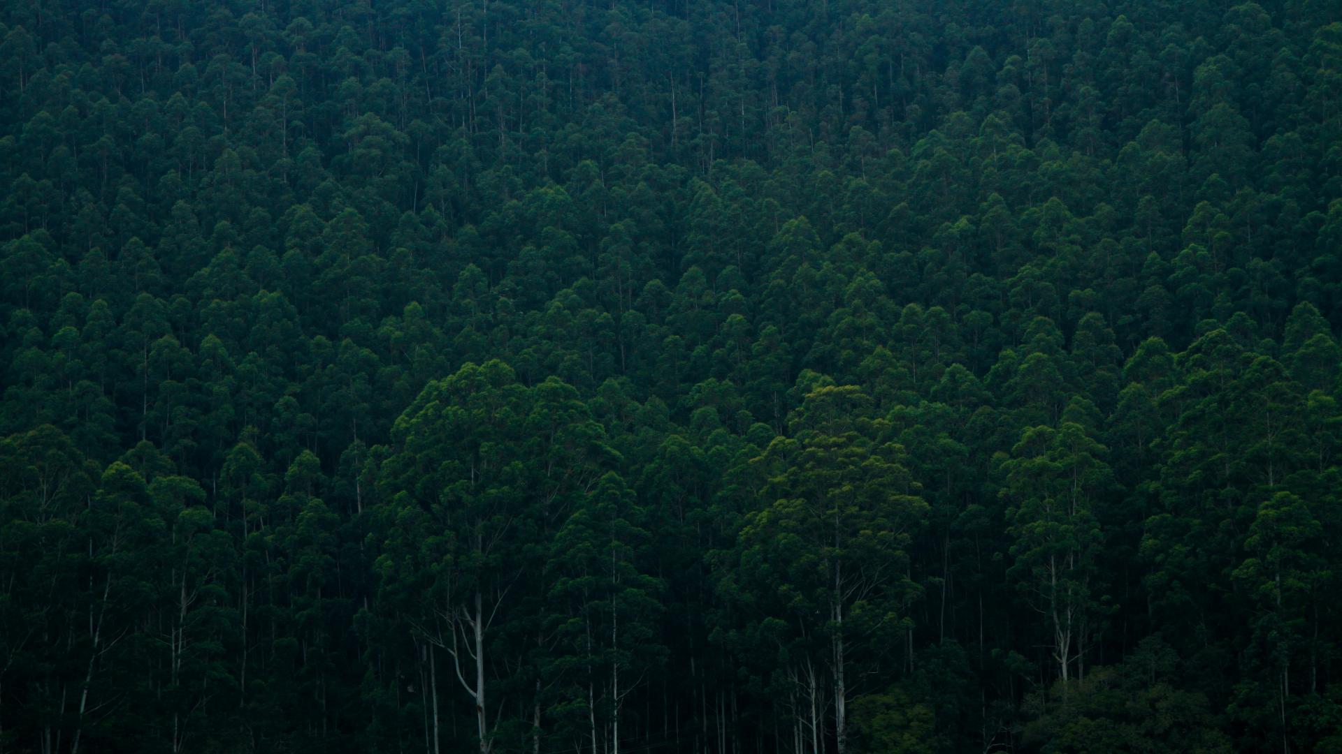 General 1920x1080 nature trees forest dark rainforest India