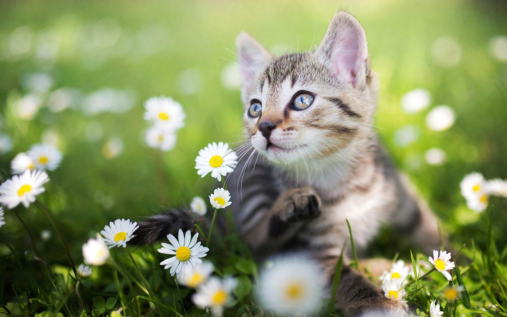 General 1920x1200 kittens nature flowers macro cats animals