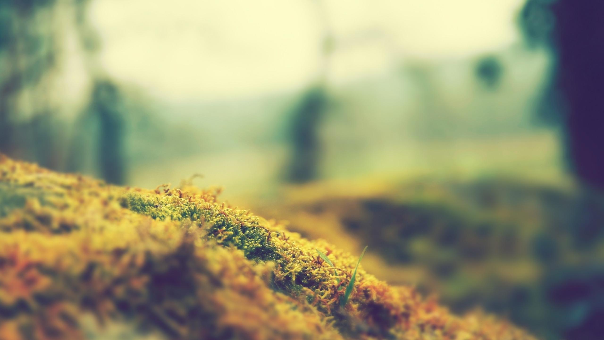 General 2560x1440 grass nature macro tilt shift plants moss photography