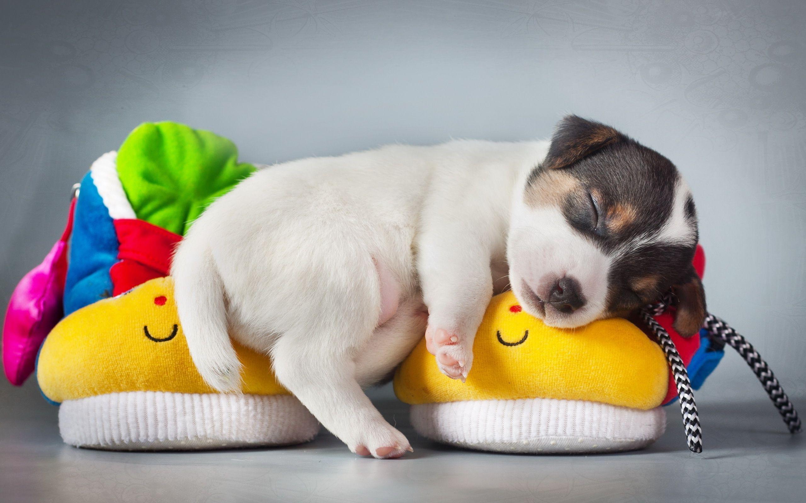 General 2560x1600 dog puppies animals sleeping